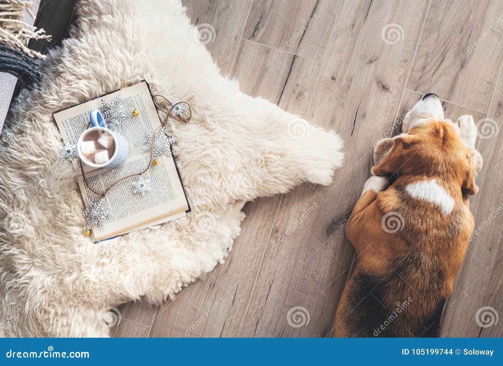 Il cane da lepre si trova sul pavimento del laminat vicino al tappeto della pelle di pecora con