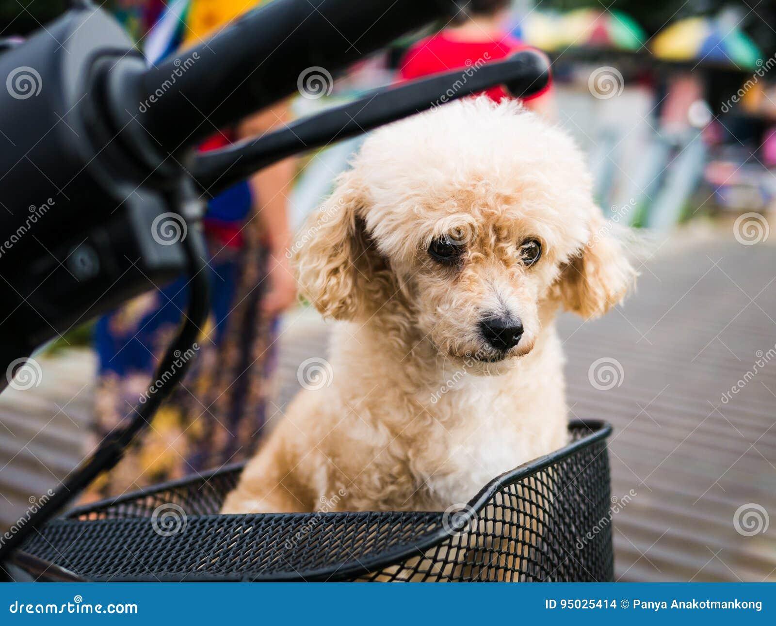 Il Cane Fa Il Fronte Triste E Proprietario Di Ricerca Fotografia
