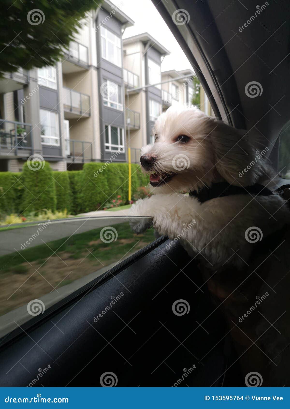 Il cane felice