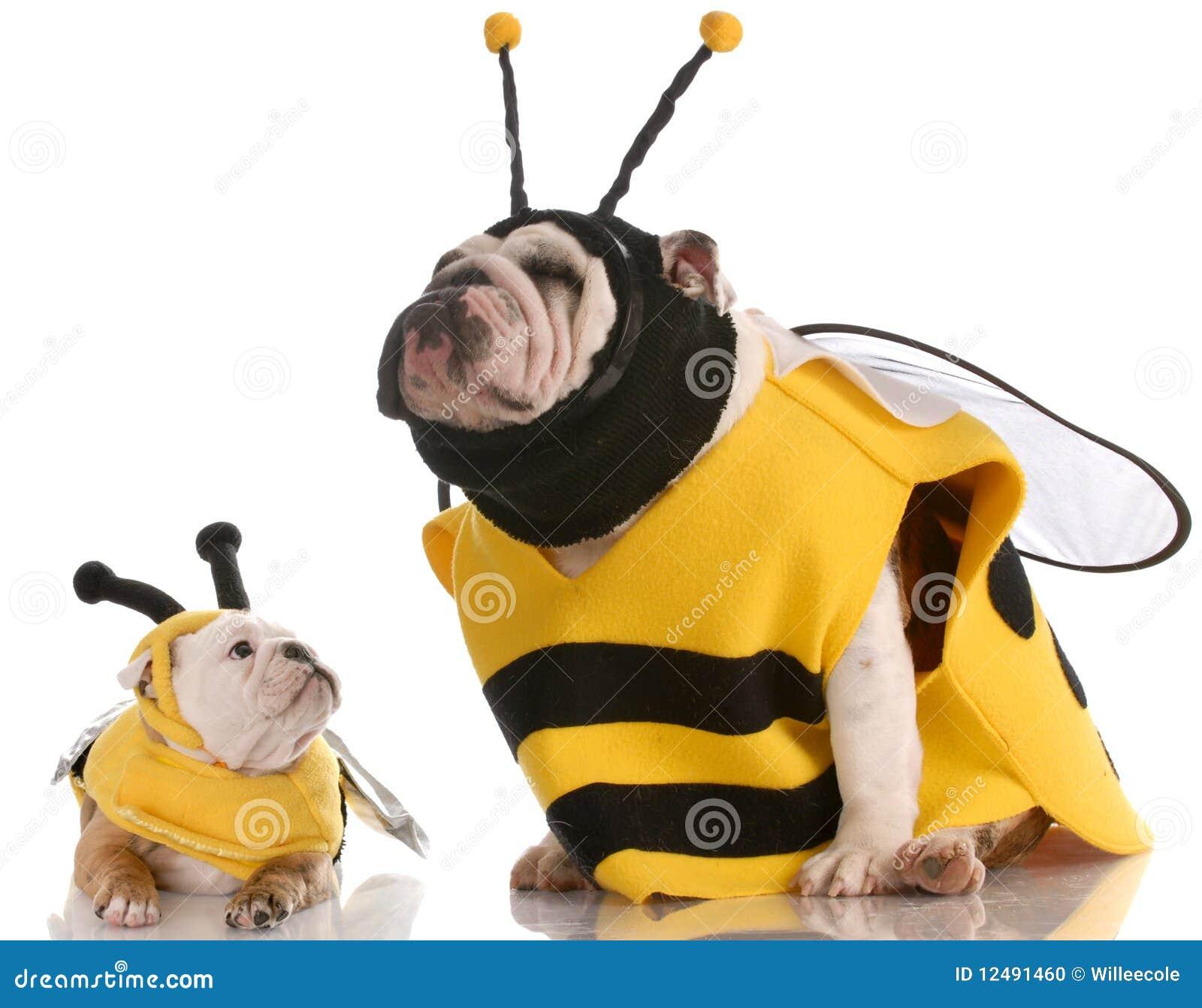 Il cane si è vestito in su come api di corrispondenza