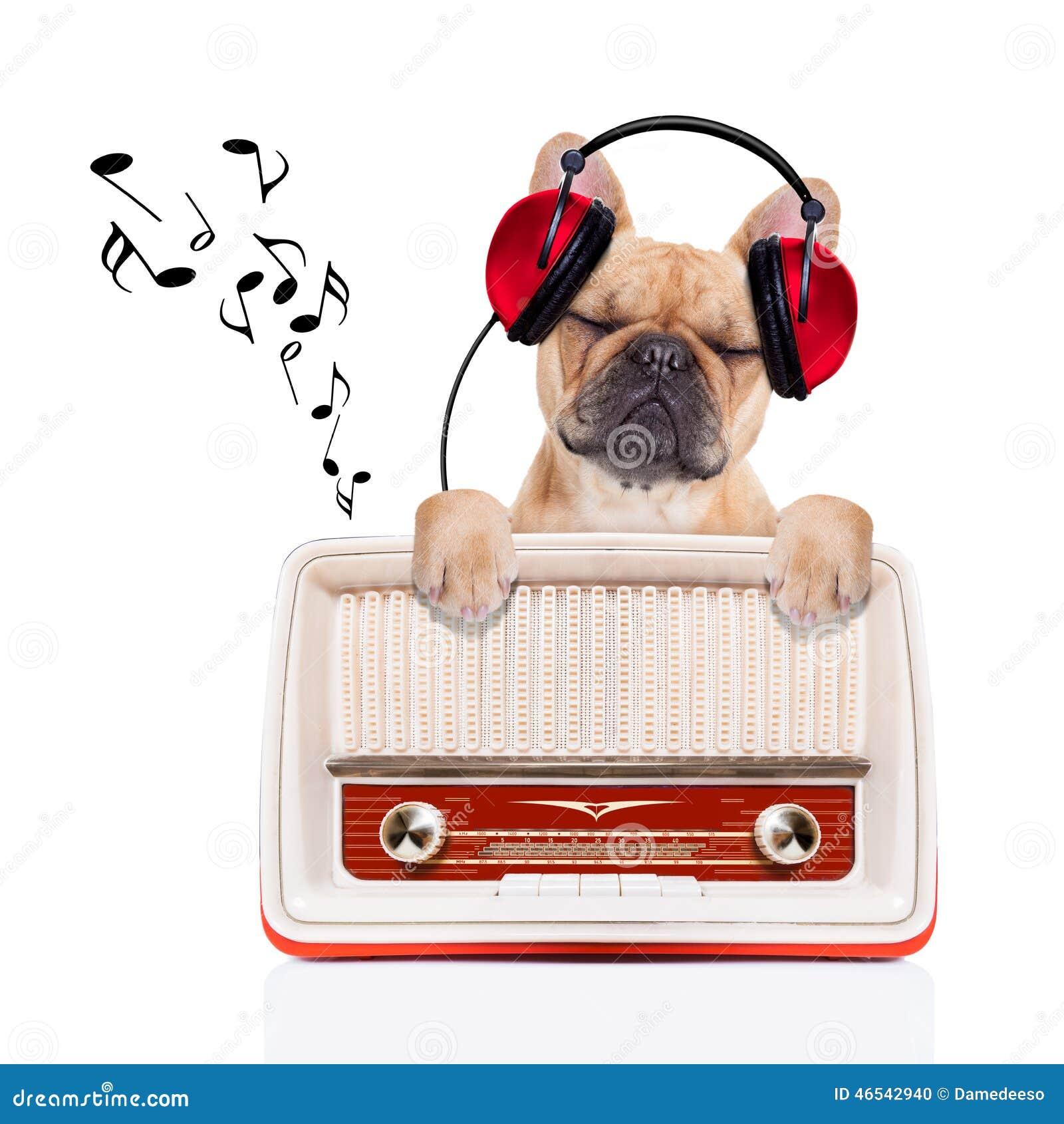Il cane si rilassa la musica