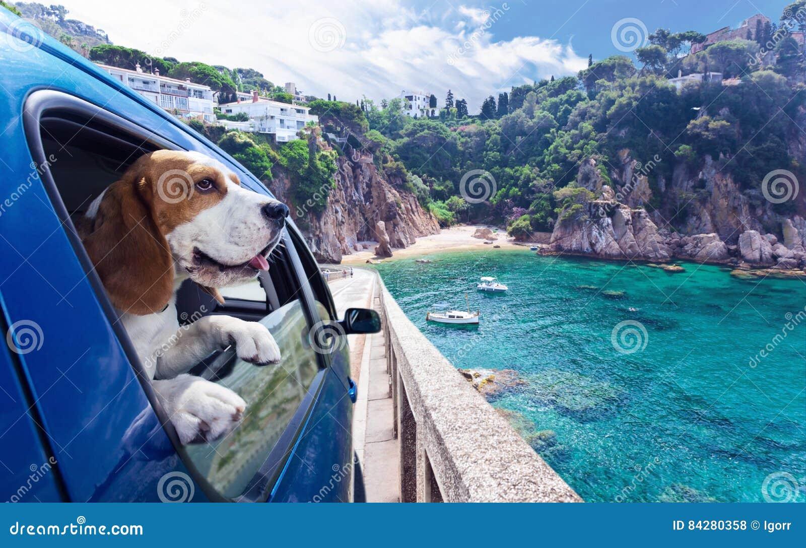 Il cane sveglio viaggia in automobile al mare