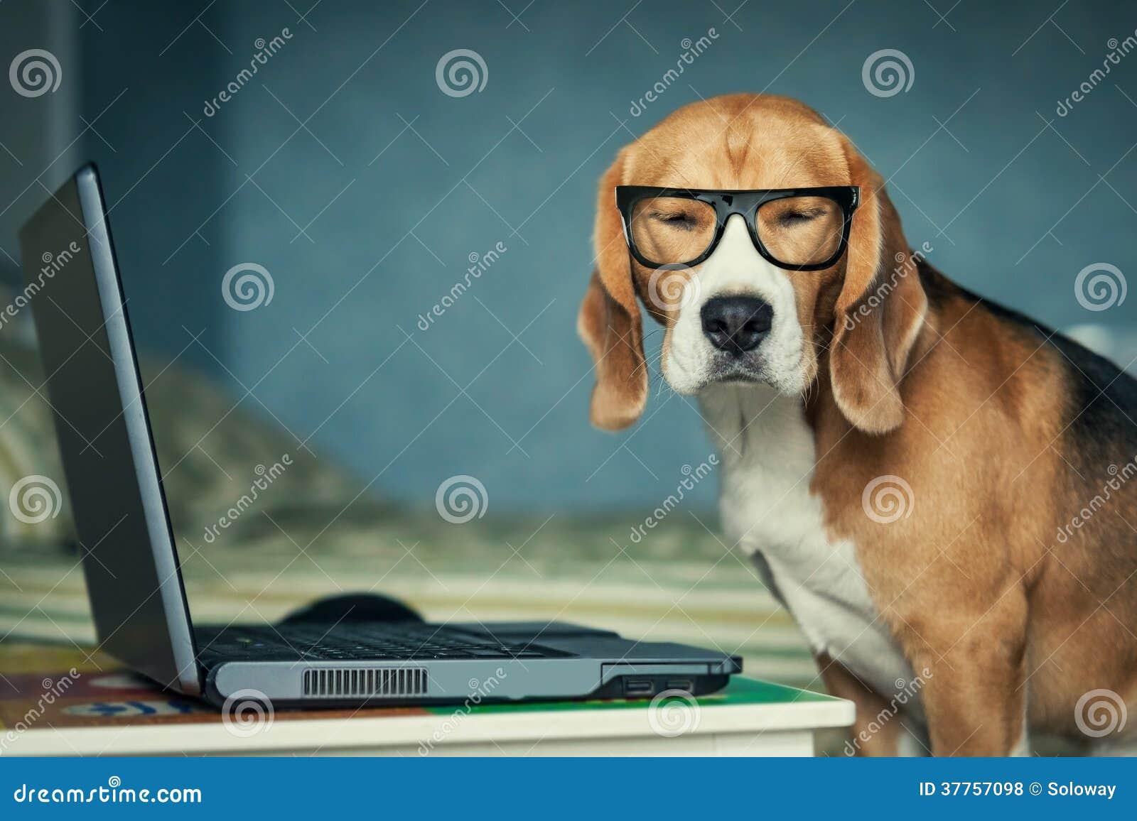 Il cane in vetri divertenti si avvicina al computer portatile