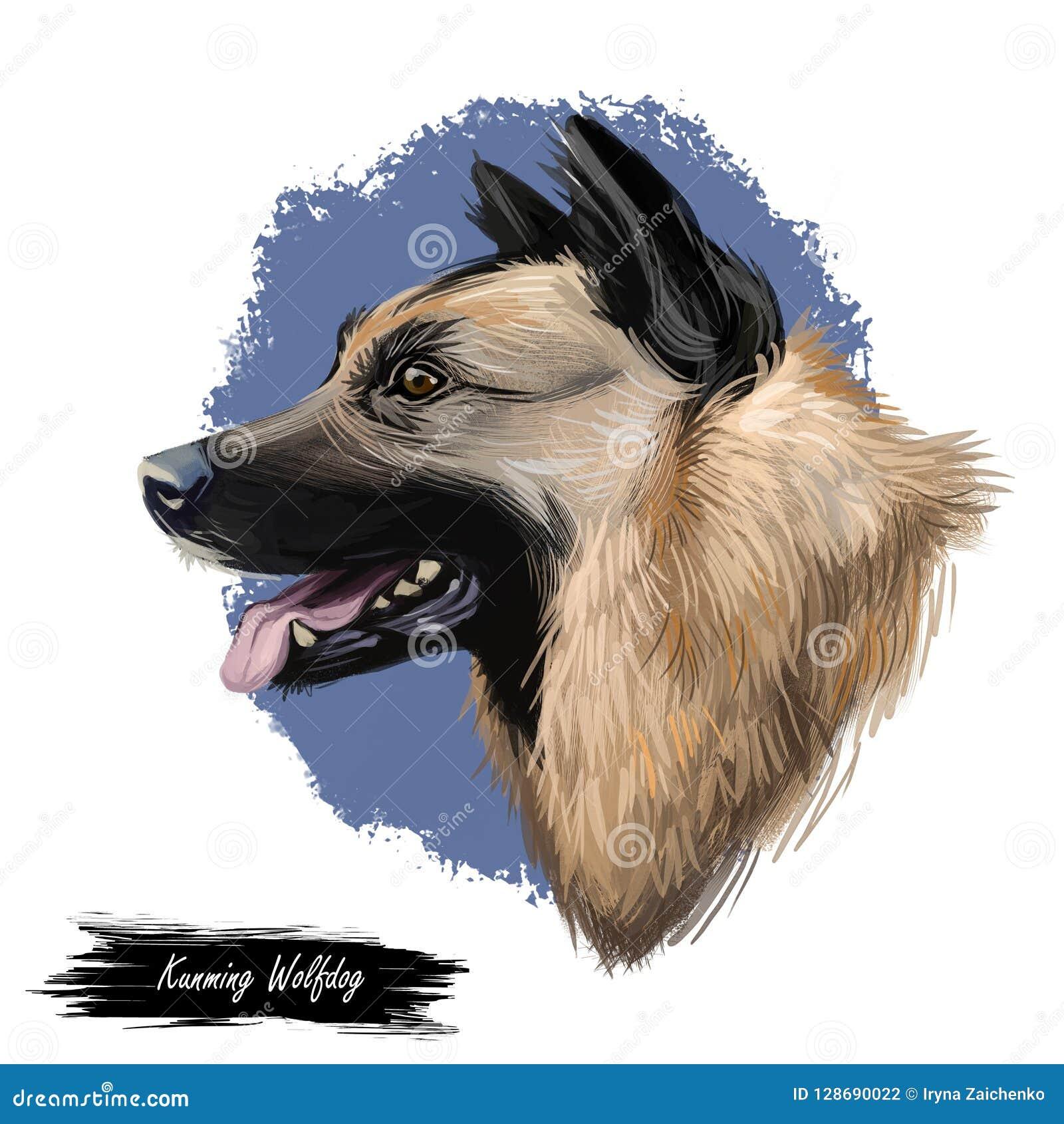 Il Canelupo Di Kunming Cane è Provenuto In Cina Illustrazione