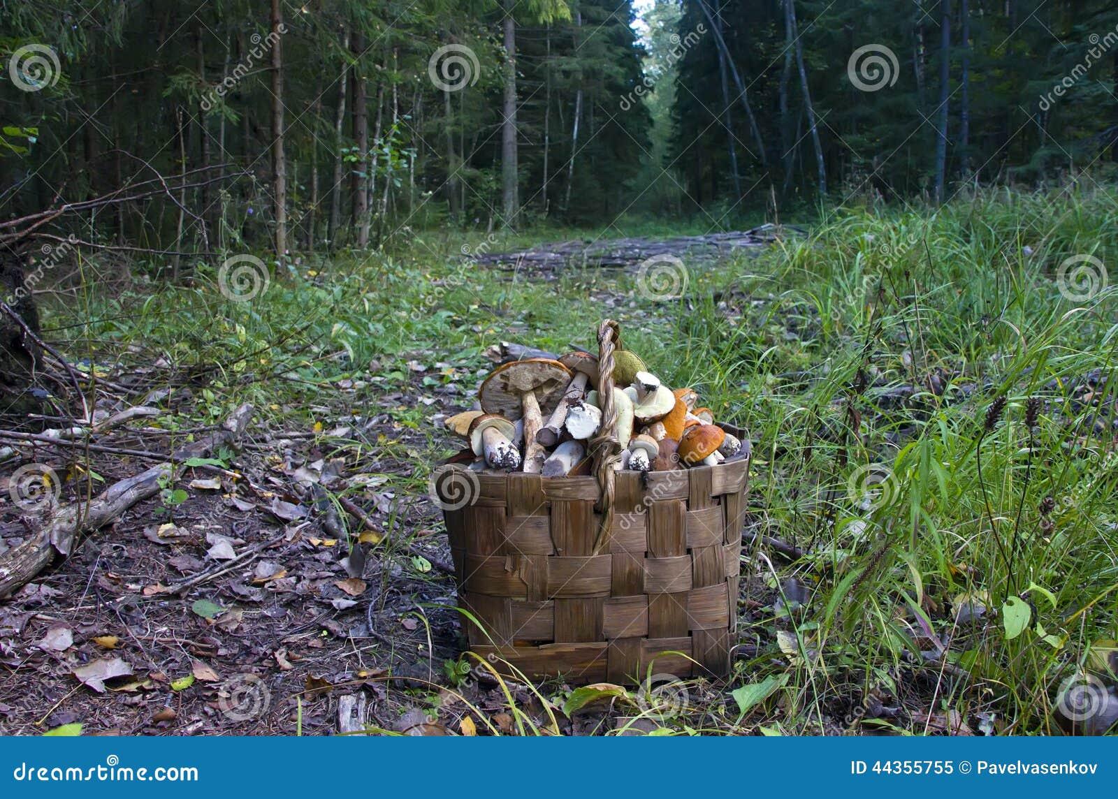 Il canestro dei funghi
