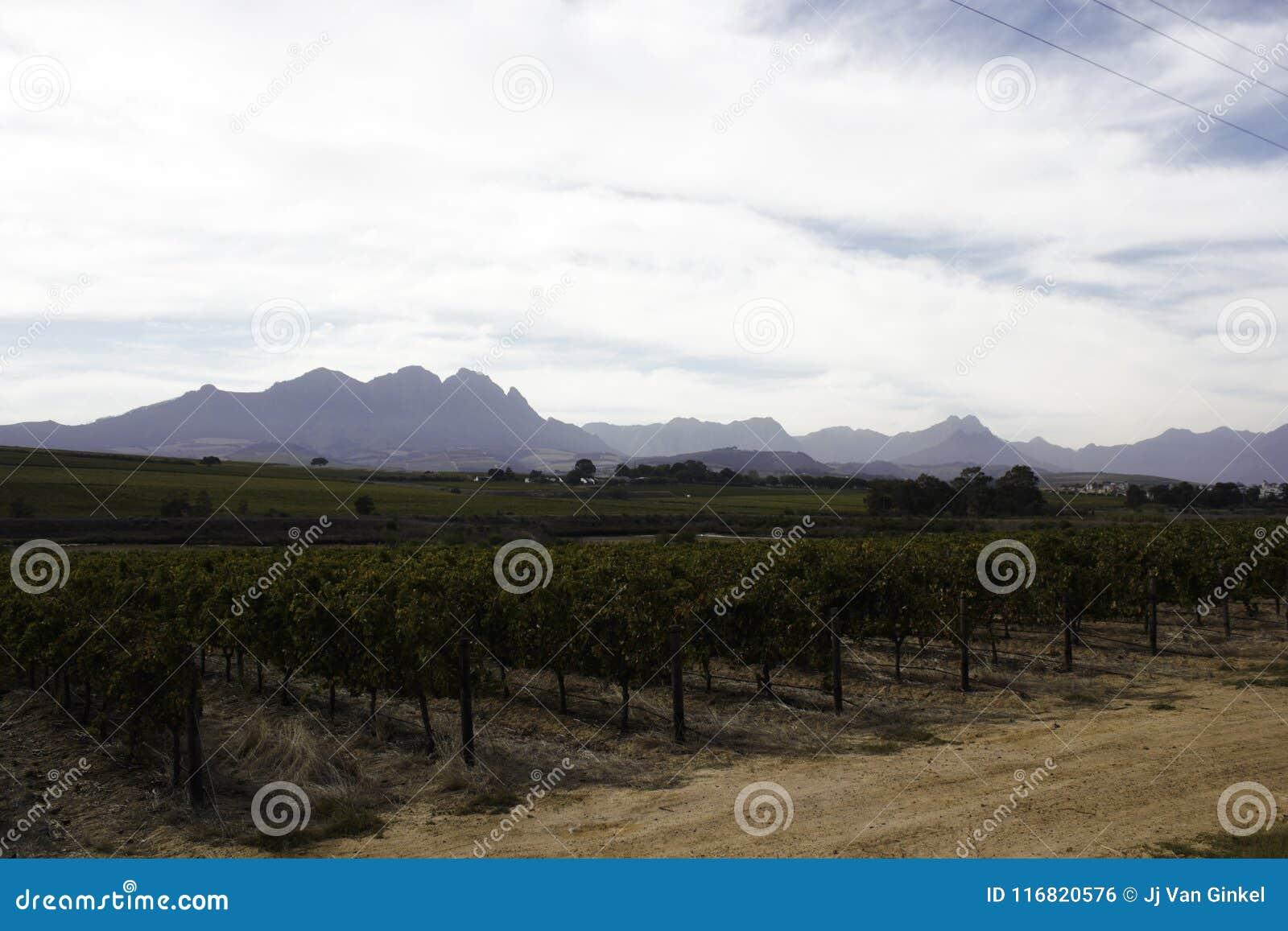 Il capo Winelands vicino a Stellenbosch, Sudafrica