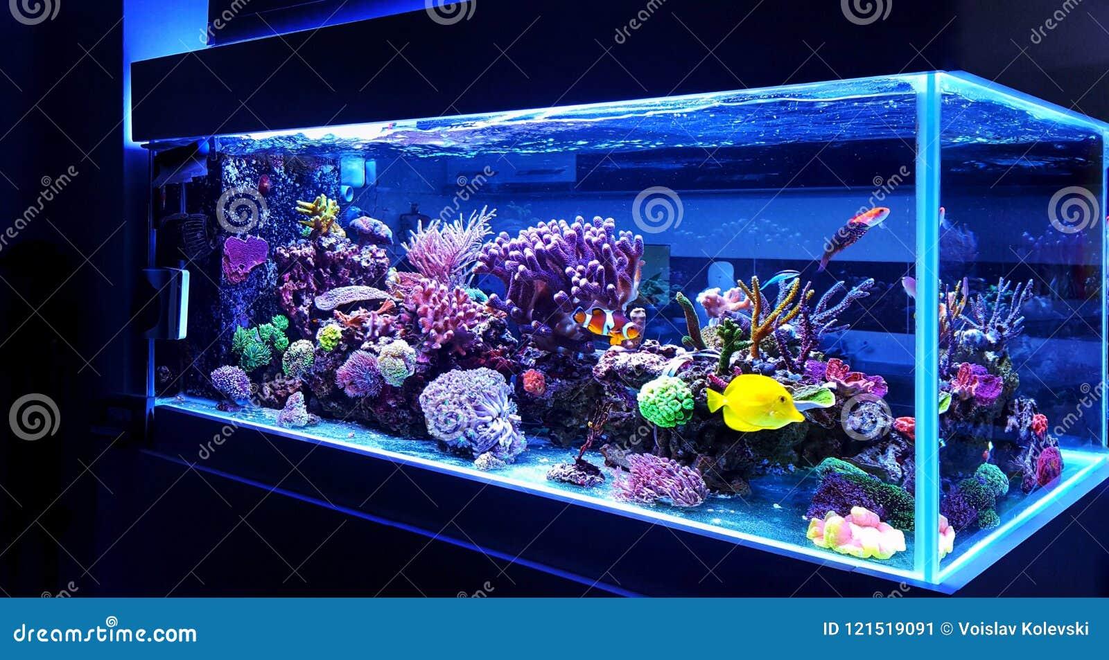 Il carro armato di pesce dell acquario della barriera corallina dell acqua salata è uno di hobby più bello