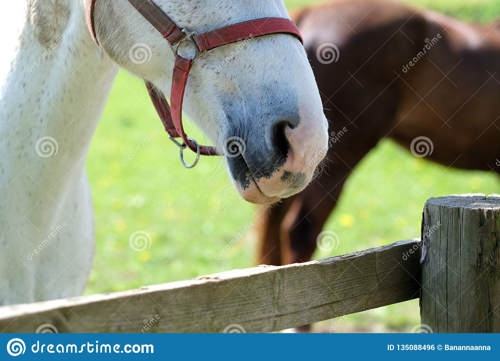 Il cavallo sta al recinto sull azienda agricola