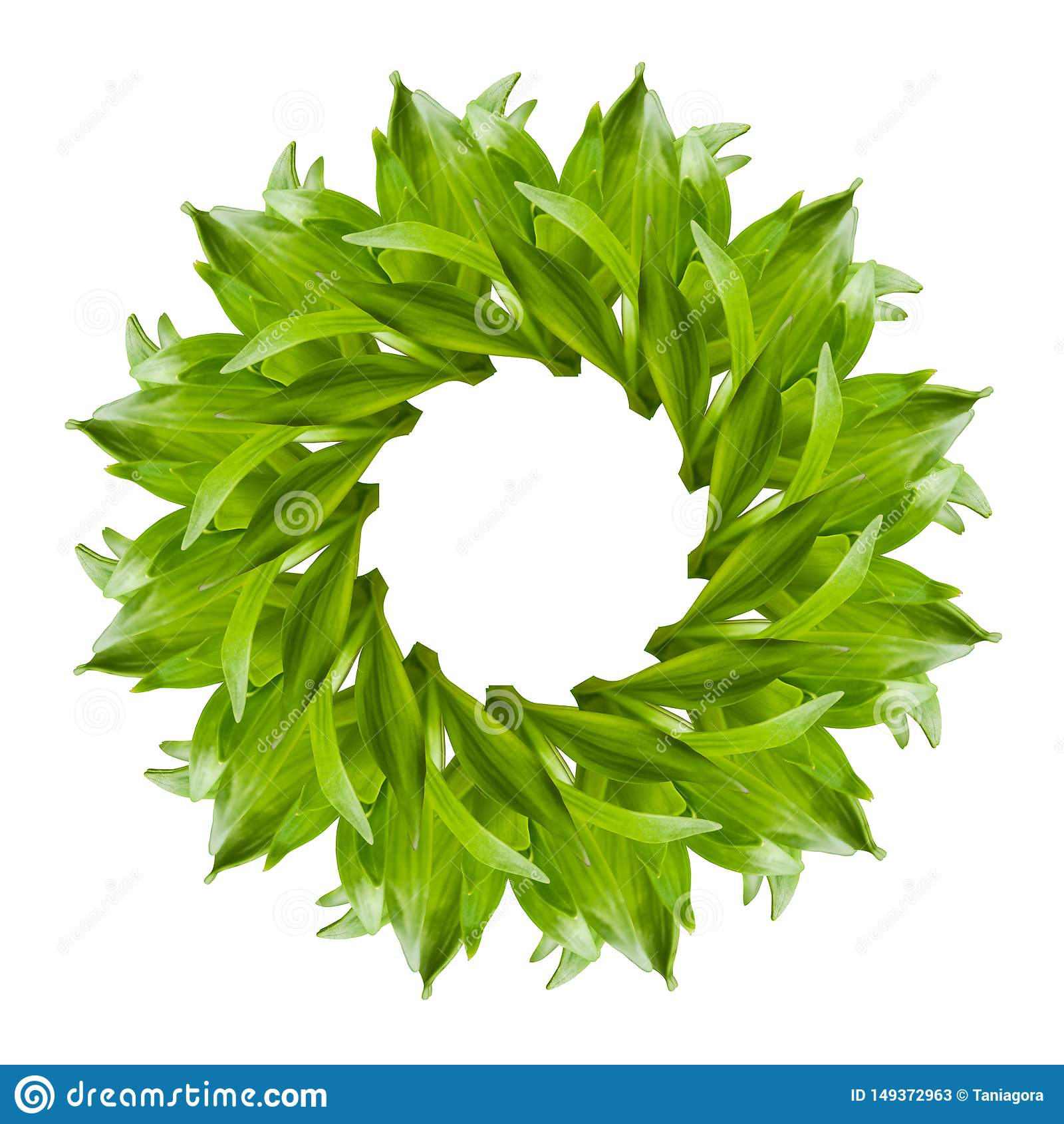 Il collage del giglio verde fresco va su fondo bianco