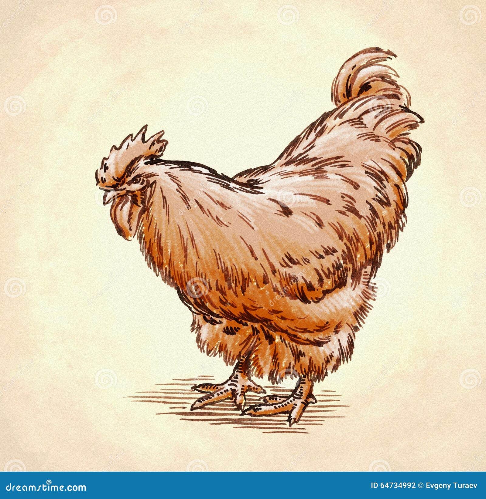 Il colore incide l illustrazione isolata del pollo