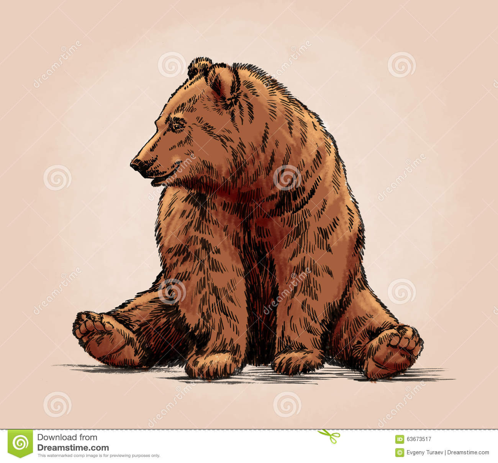 Il colore incide l orso grigio isolato
