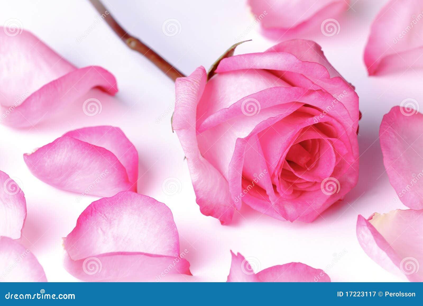 Il colore rosa è aumentato