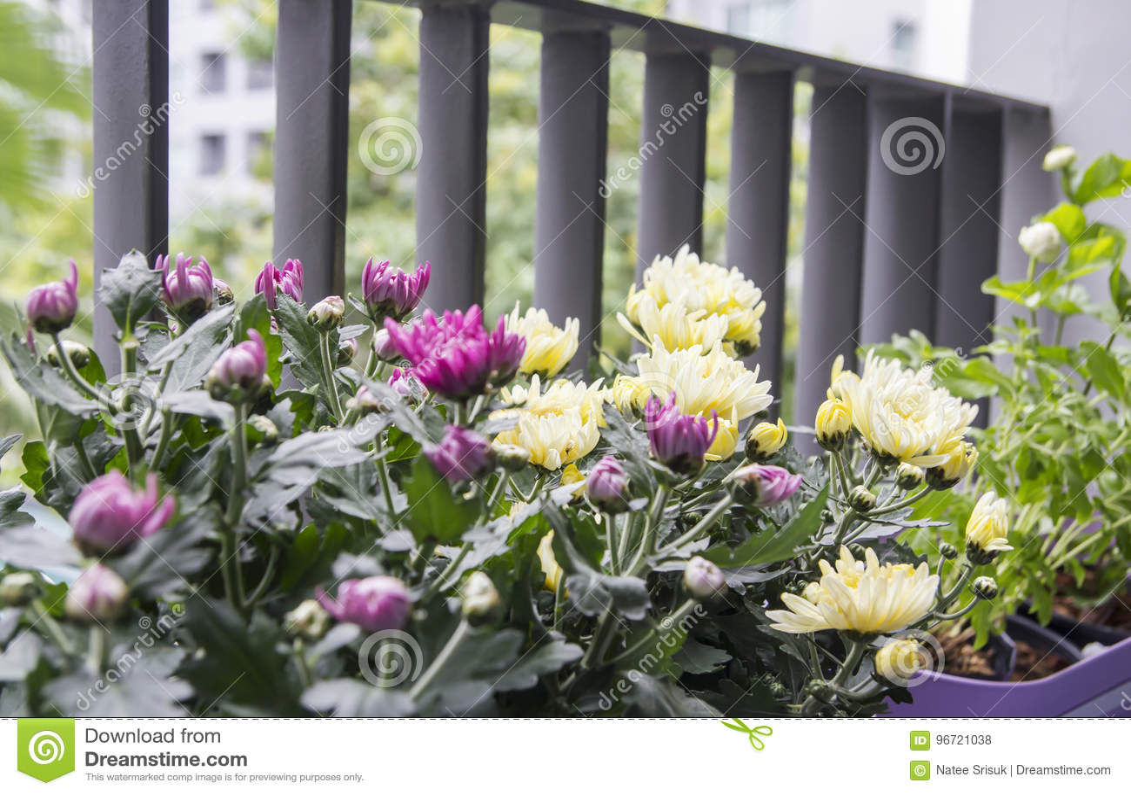Giardino Sul Balcone Di Casa : Come arredare il balcone idee e consigli