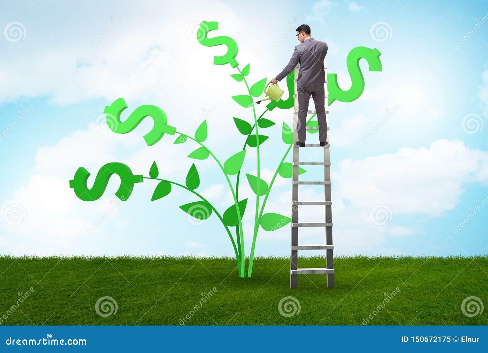 Il concetto dell albero dei soldi con acqua dell uomo d affari