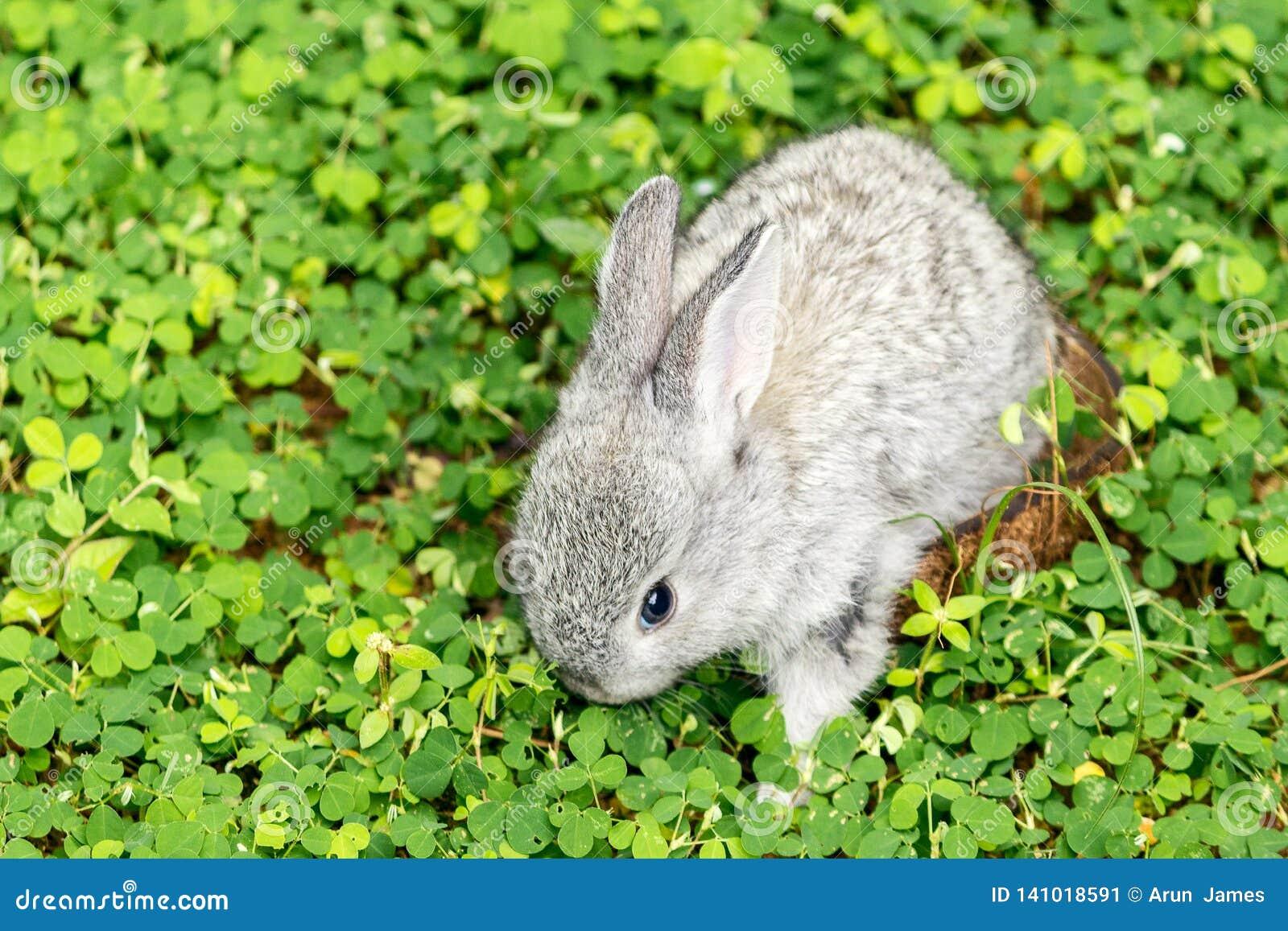 Il coniglio del bambino va libertà