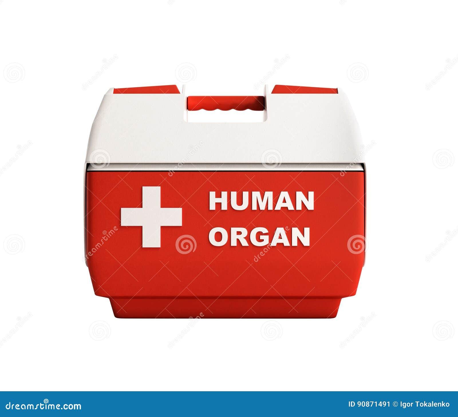 Il contenitore chiuso 3d rosso di frigorifero dell organo umano non rende ombra