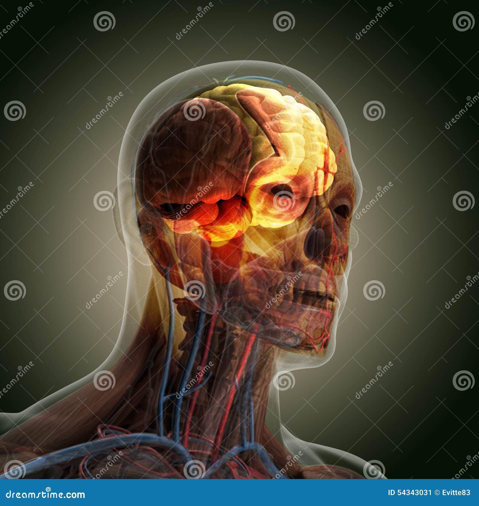Il corpo umano (organi) dai raggi x su fondo nero
