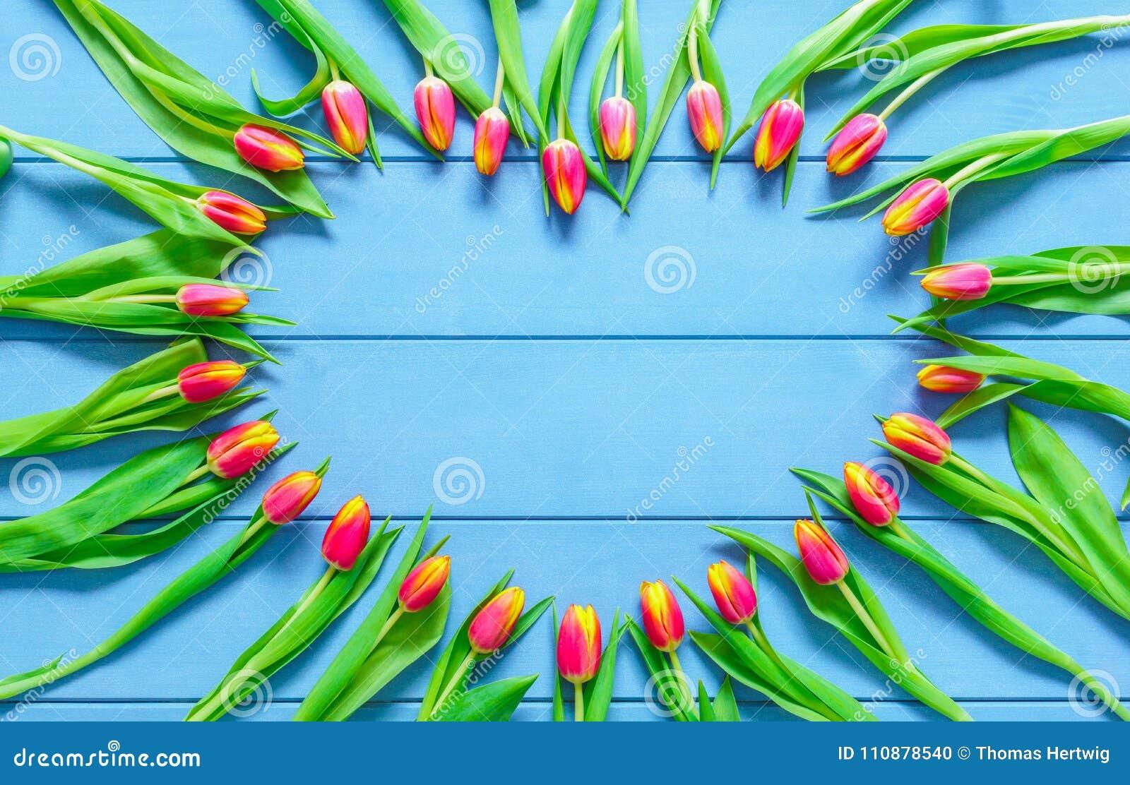 Il cuore dai tulipani rossi fiorisce sulla tavola di legno blu per il giorno dell 8 marzo, di Giornata internazionale della donna