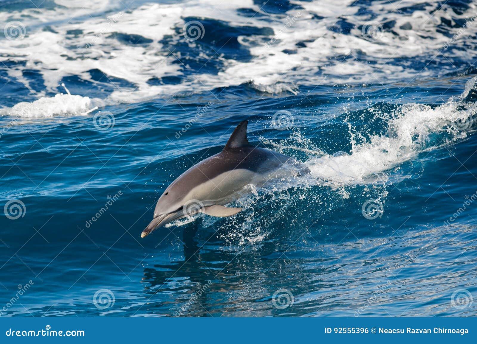 Il delfino che salta fuori del mare