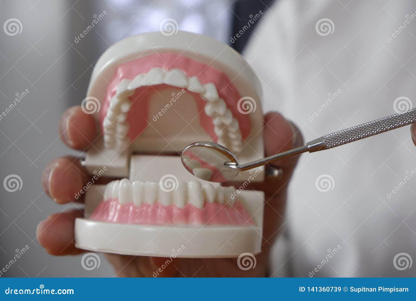 Il dentista facendo uso degli strumenti sui denti modella nel concetto dentario e medico dentario professionale della clinica del
