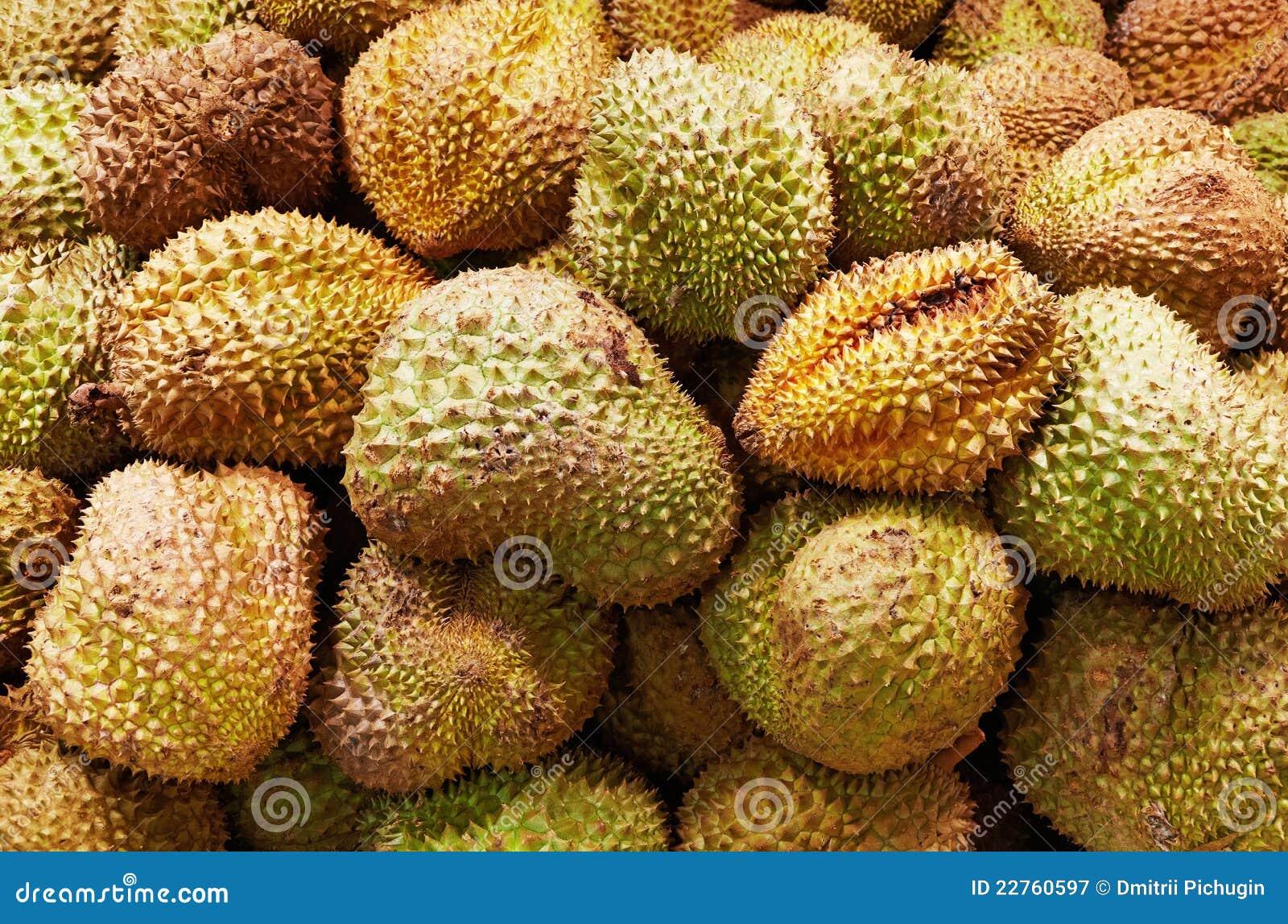 Il Durian fruttifica priorità bassa
