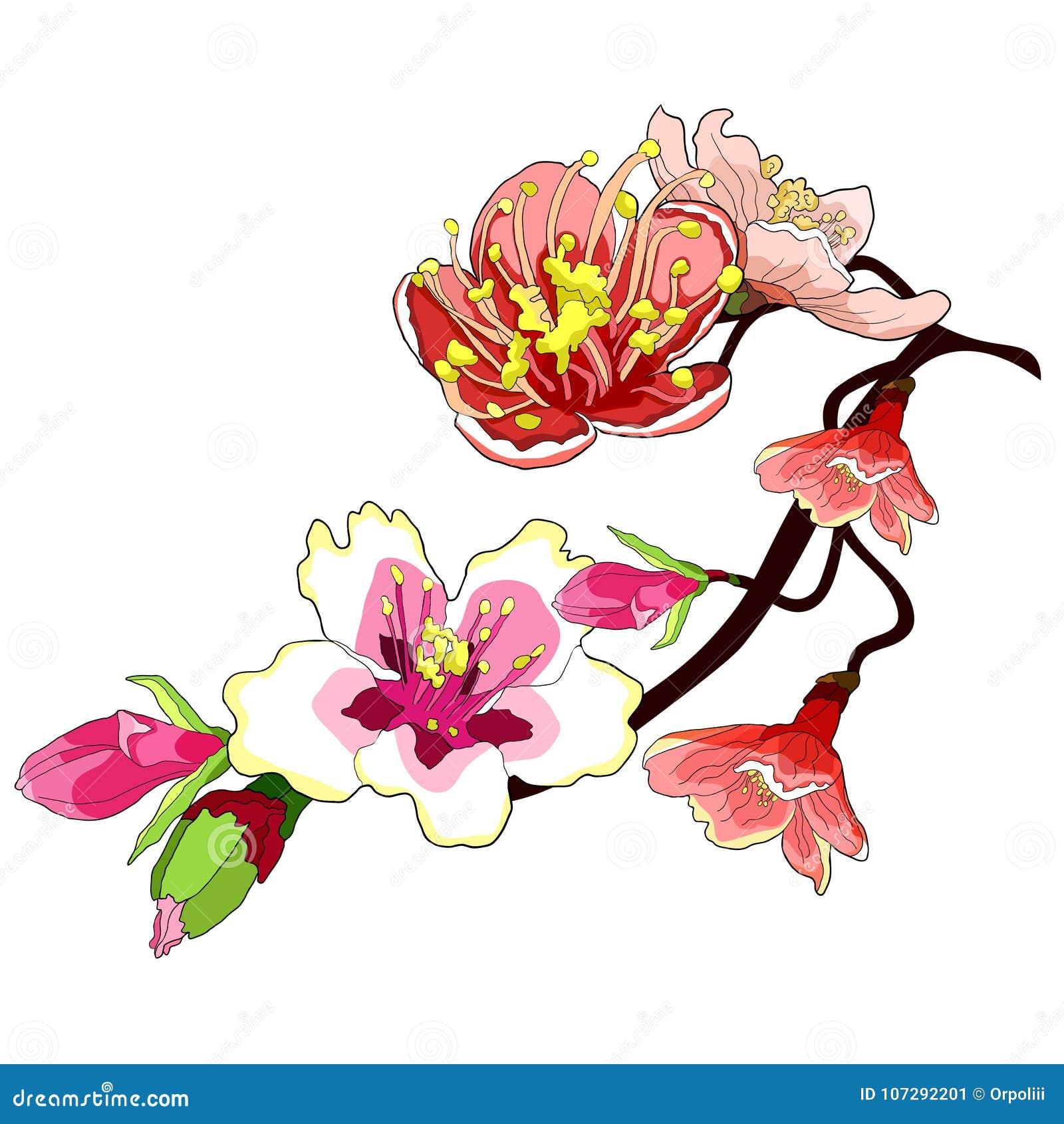 Il fiore del ramo della mandorla sboccia un illustrazione di vettore del dado