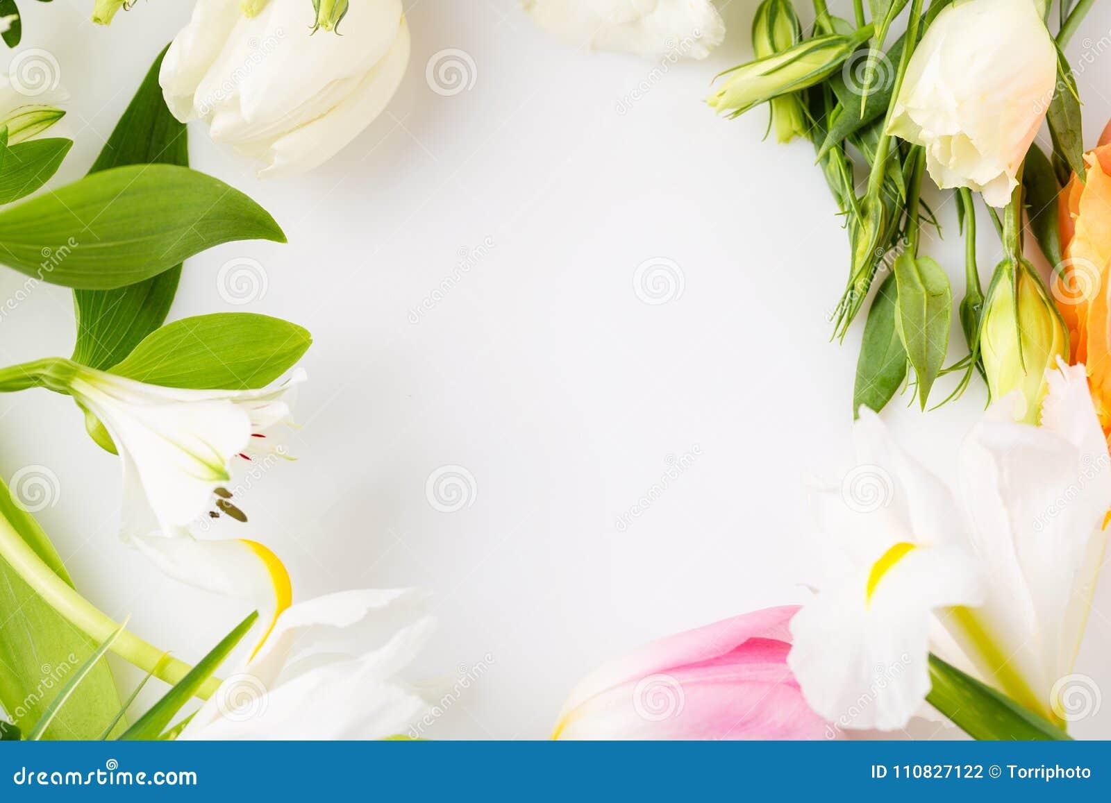Fiori Con La C.Il Fiore Della Molla Ordinato Primo Piano Rasenta Il Fondo Bianco