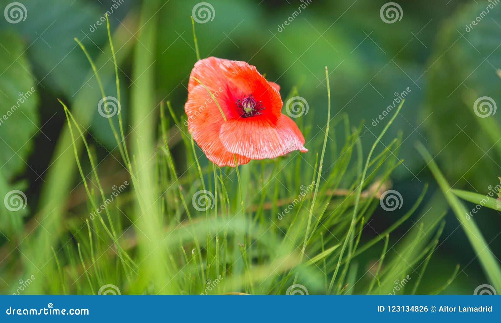 Il fiore nel prato