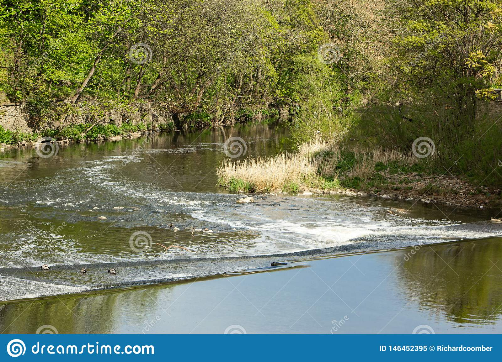 Il fiume Aire a Saltaire