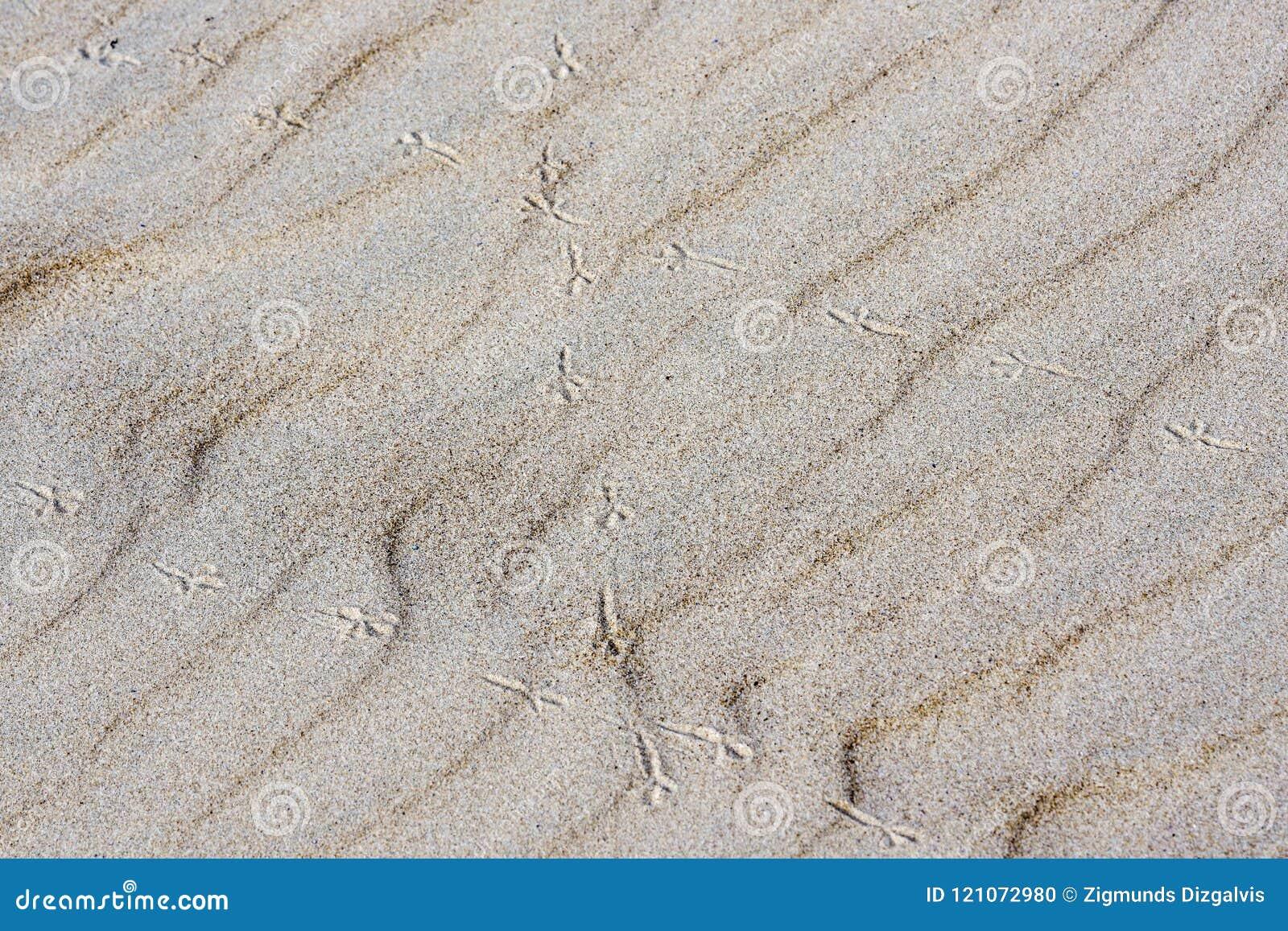 Il fondo della sabbia, vento ha formato il sollievo, orme dell uccello