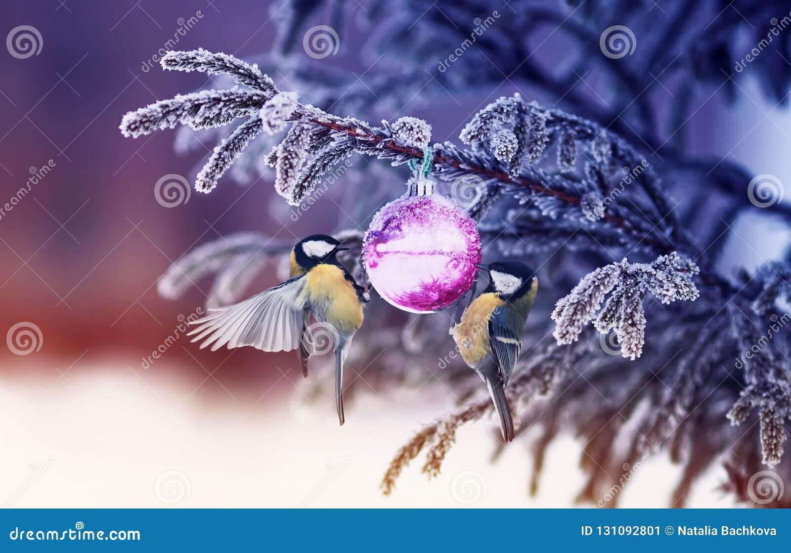 Il fondo naturale dell inverno con i bei capezzoli degli uccelli appende su uno SH