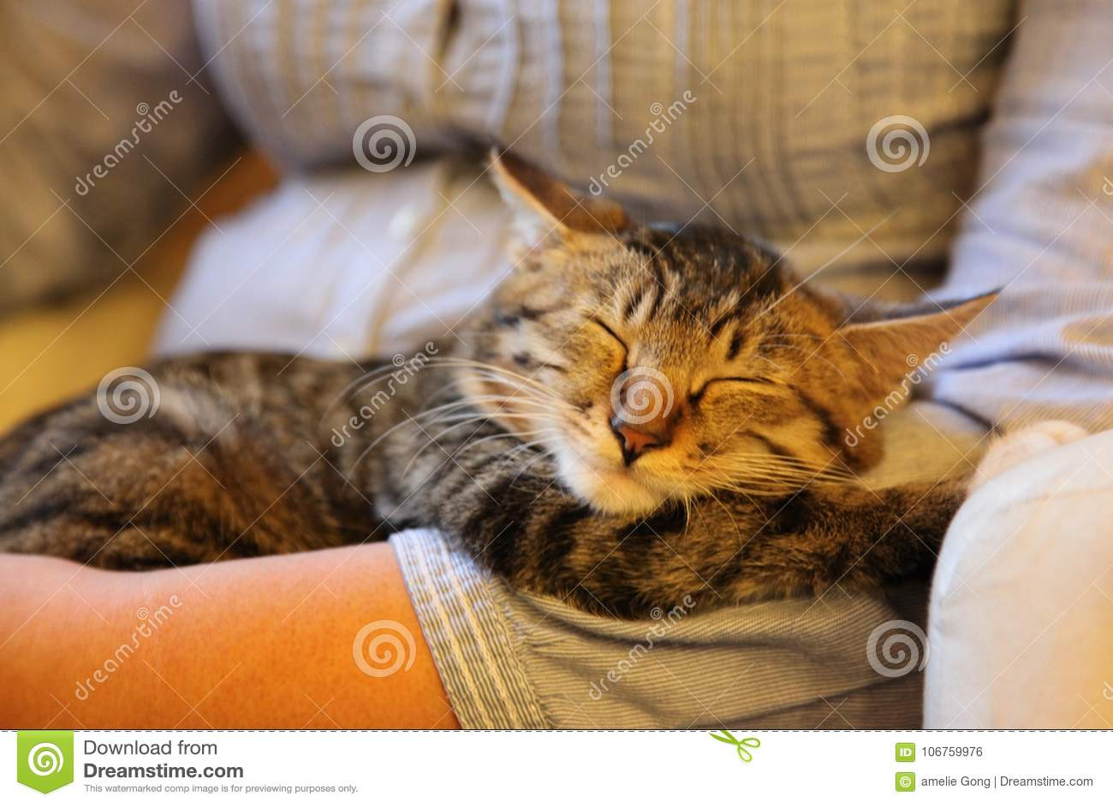 Il gattino dorme così comodo