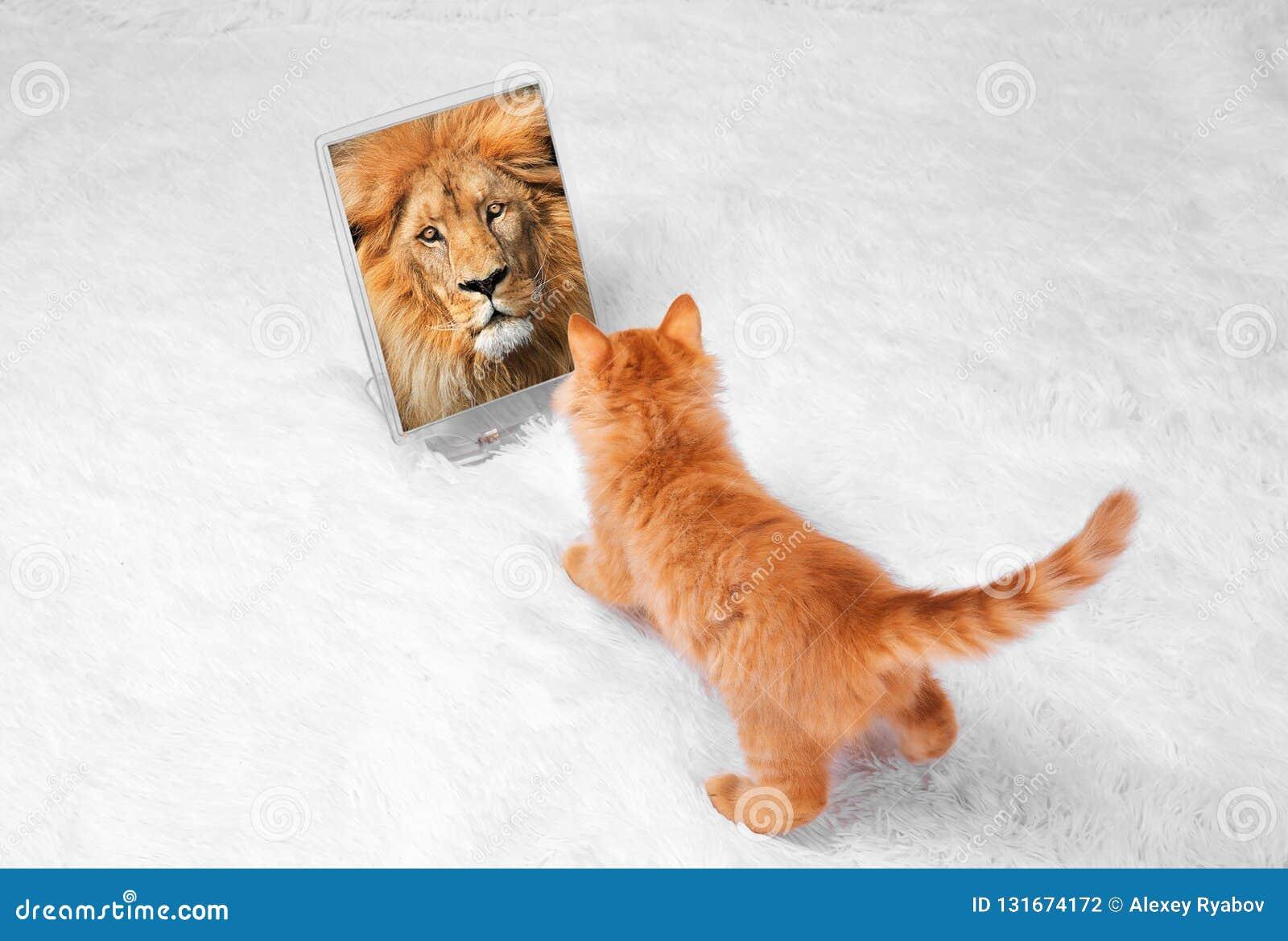 Il gattino rosso su un fondo bianco gioca le bugie di sguardi