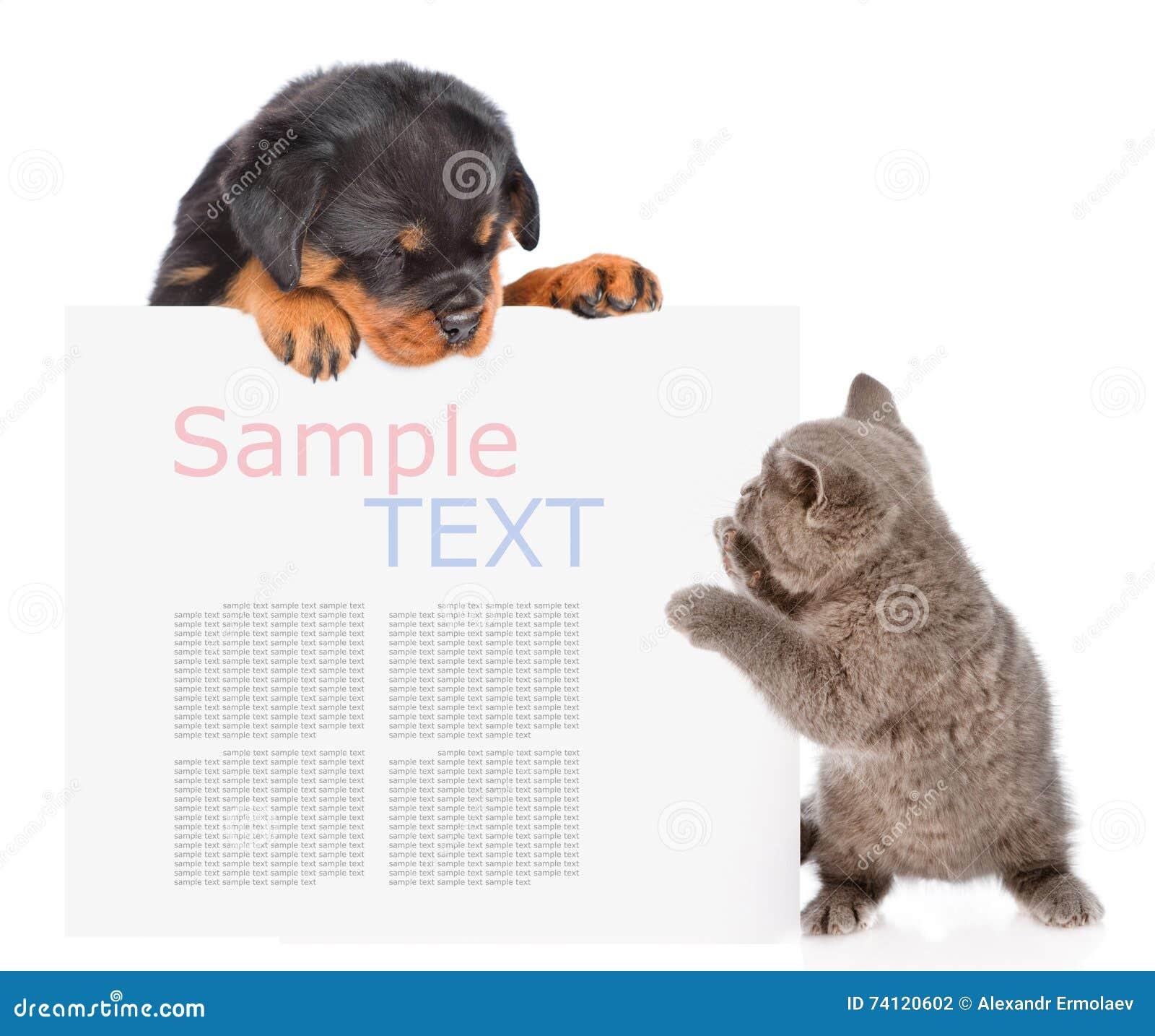Il gatto allegro ed il cucciolo del rottweiler che dà una occhiata da dietro svuotano il bordo