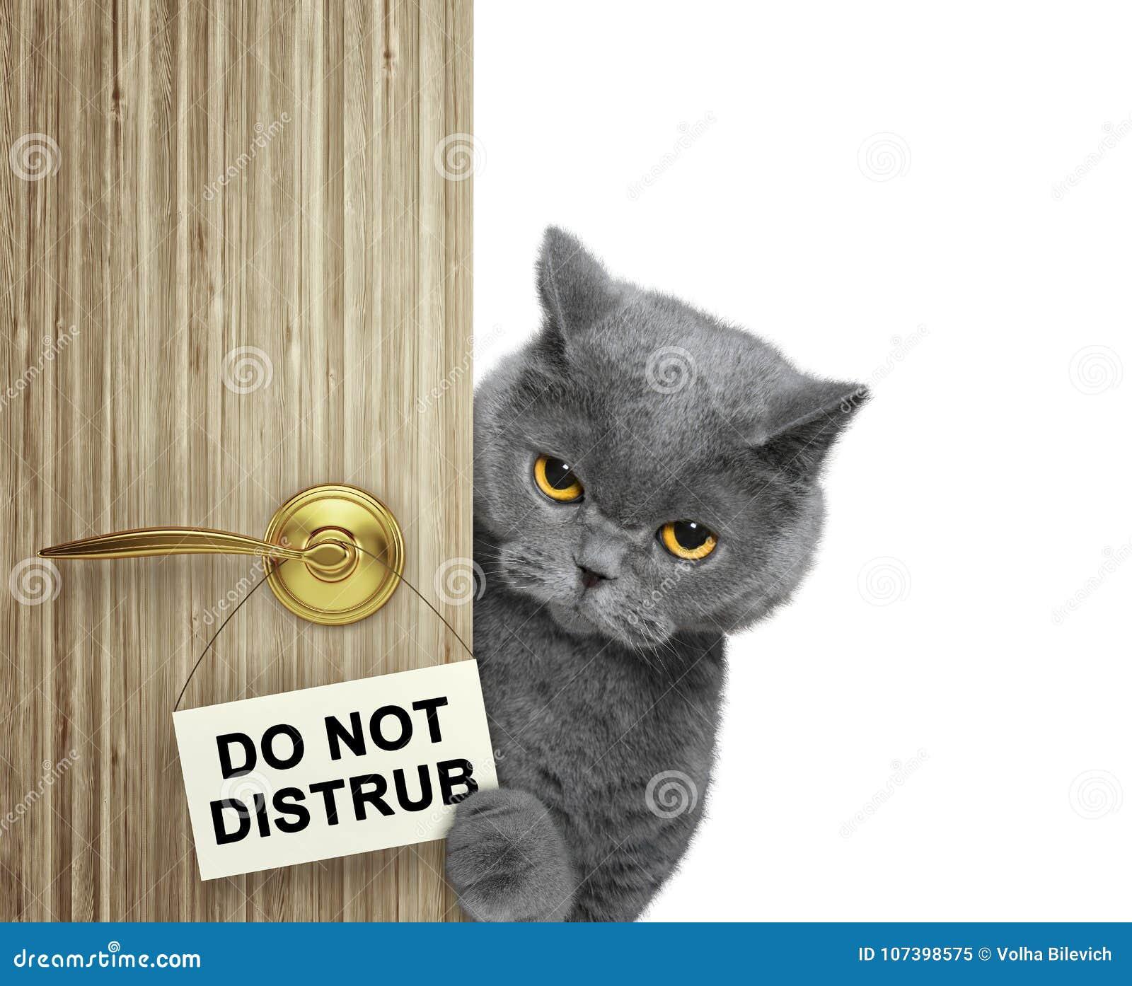Il gatto dà una occhiata a fuori da dietro la porta Non disturbi Isolato su bianco