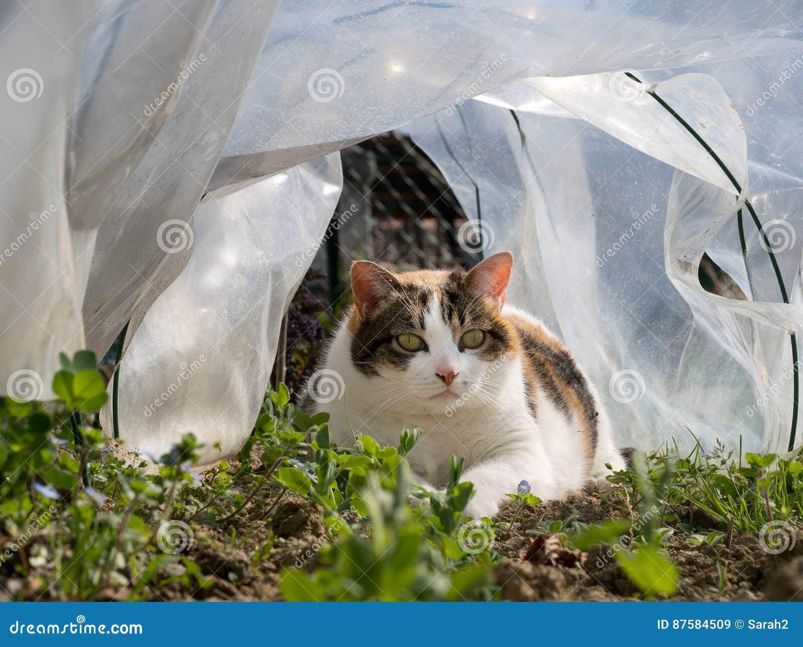 Animali Da Giardino In Plastica.Il Gatto Dell Animale Domestico In Piselli Di Sorveglianza Della