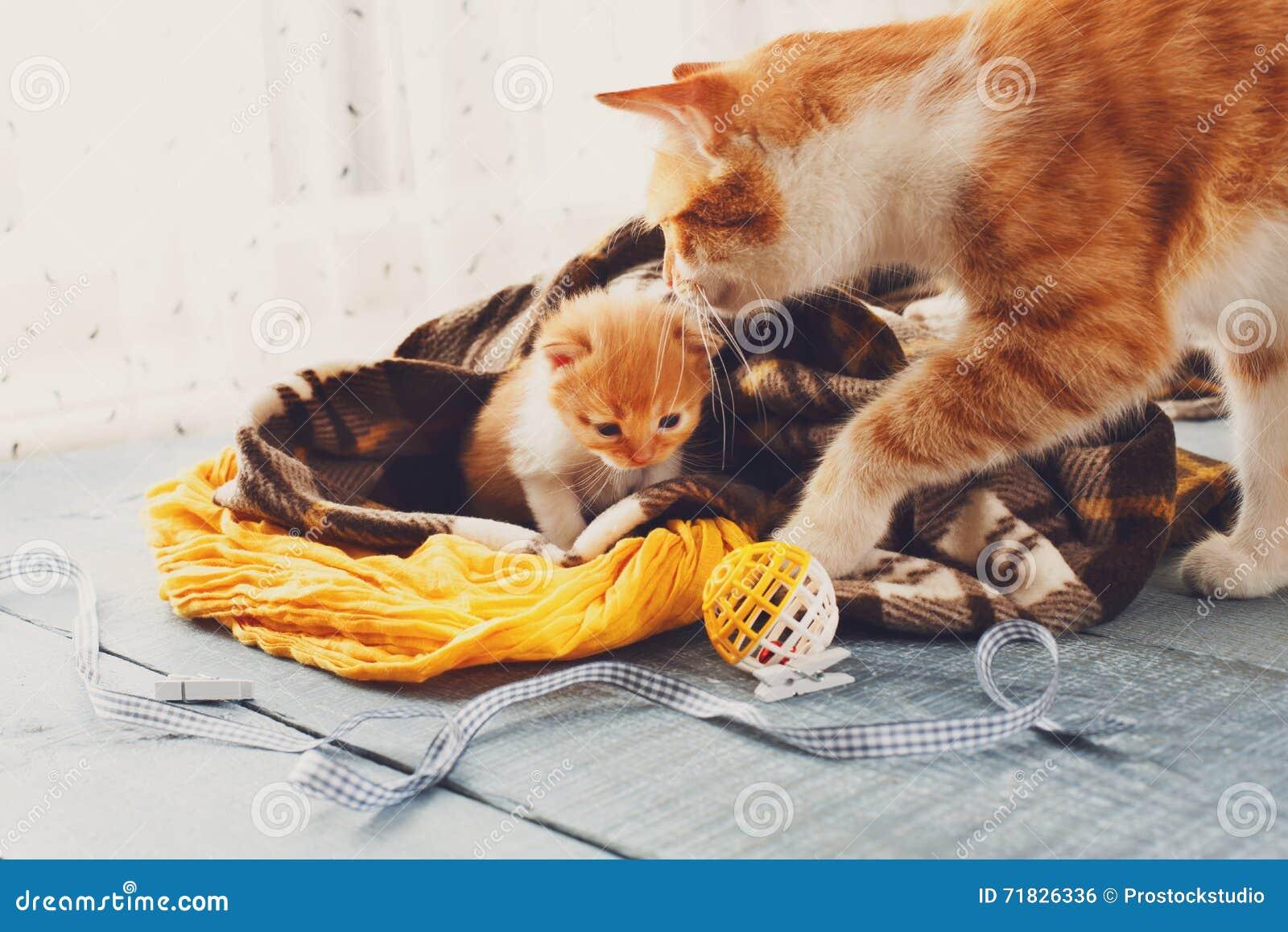Il gatto della madre viene al gattino