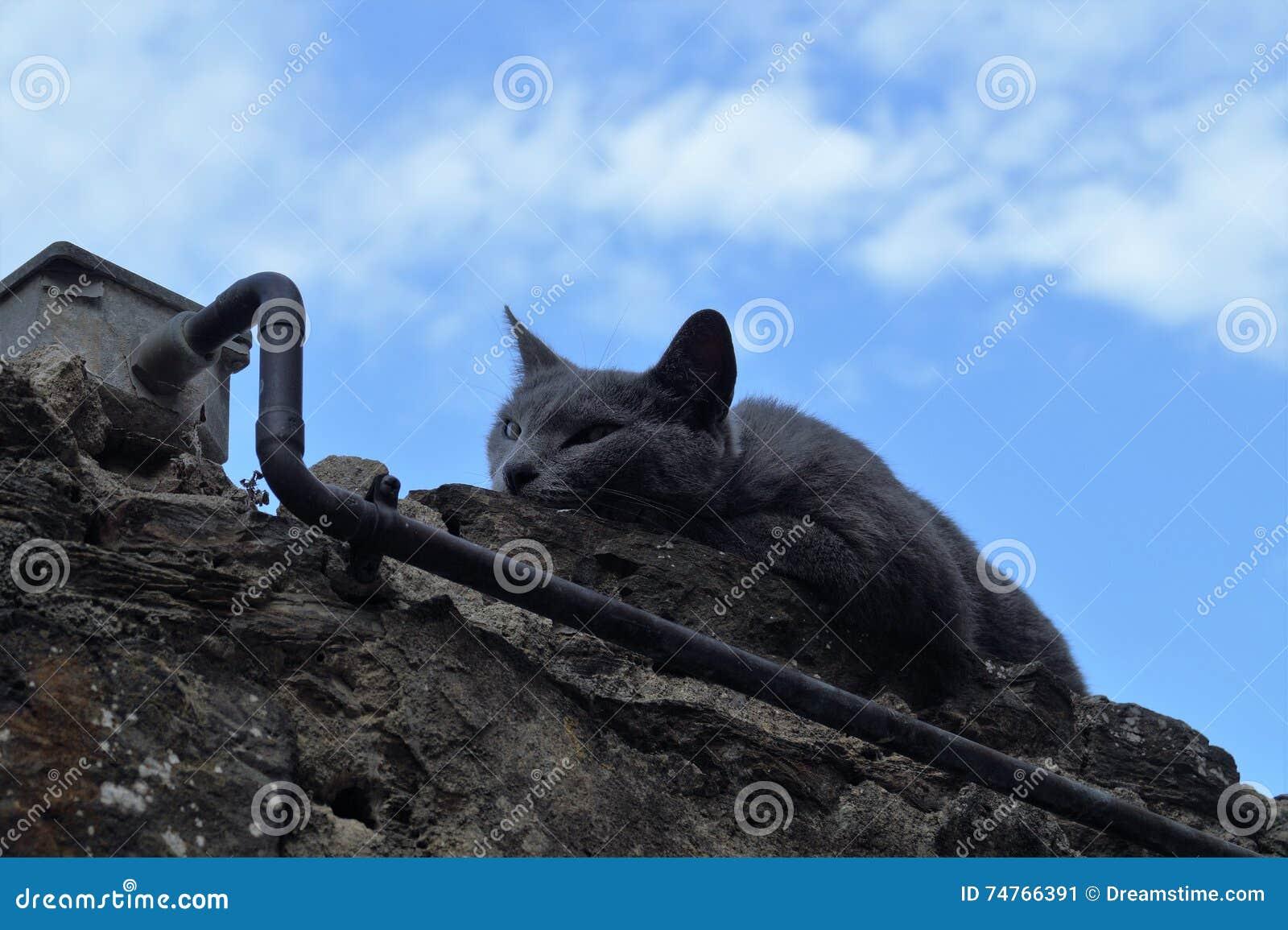 Il gatto dorme sulla parete