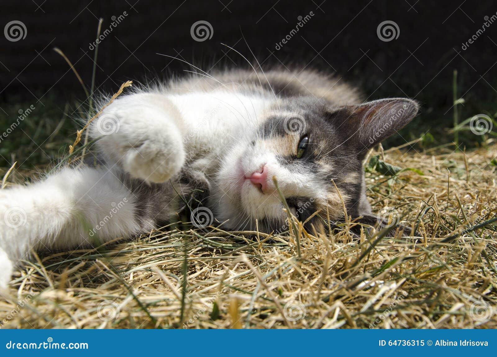 Il gatto e la natura di estate