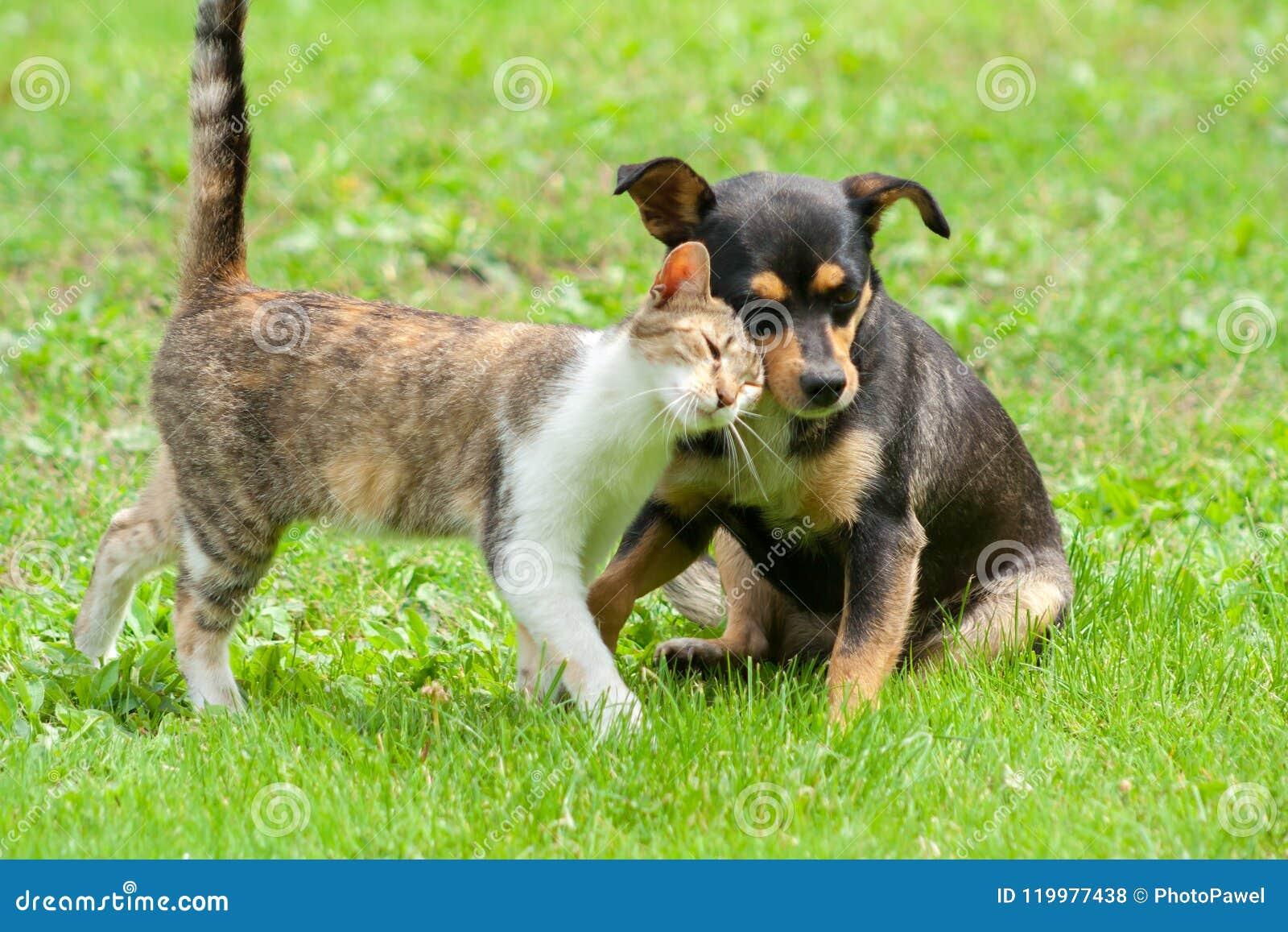 Il gatto ed il cane stanno toccando le loro teste Bella amicizia animale