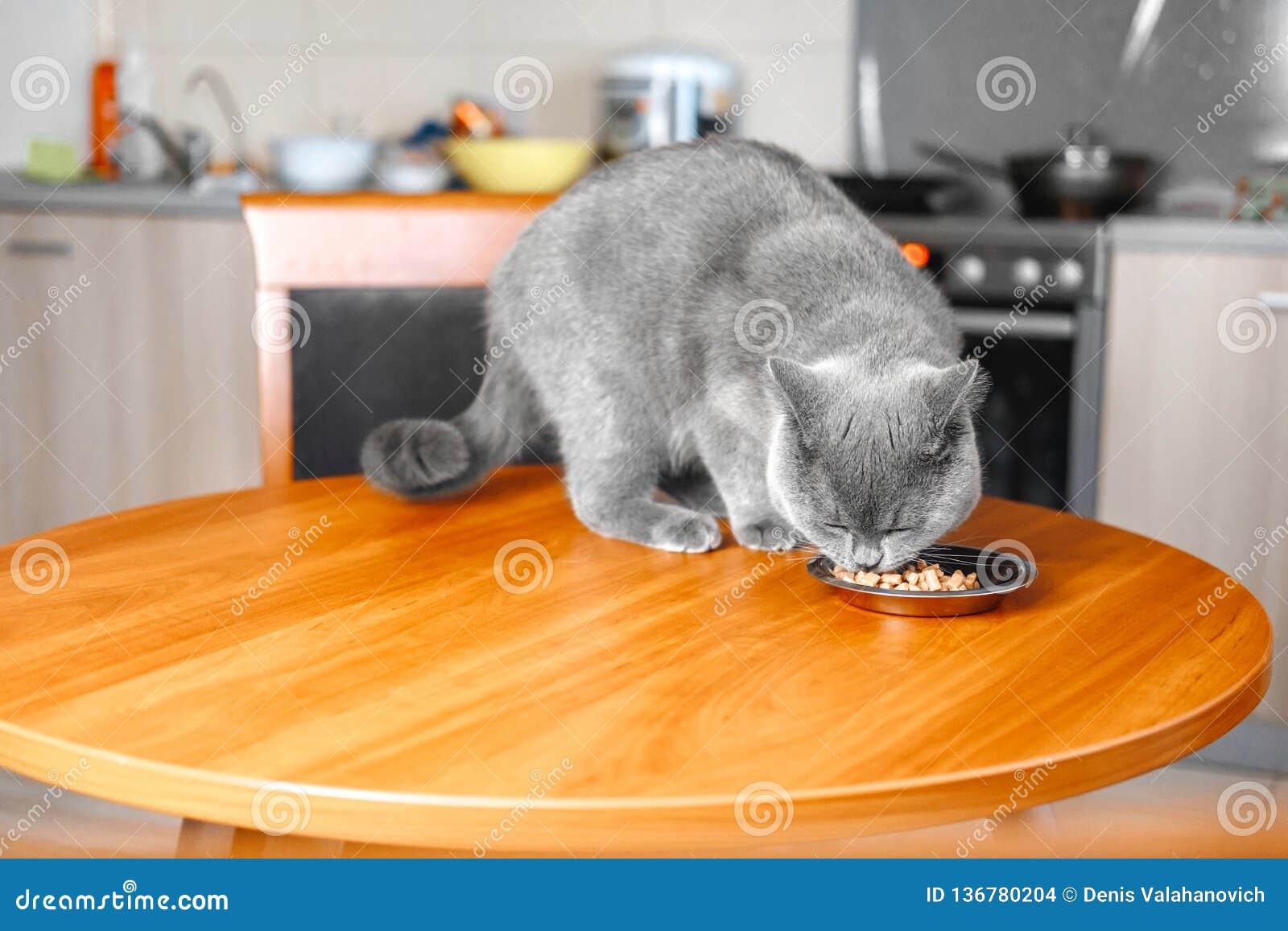 Il gatto mangia l alimento da una ciotola alla tavola