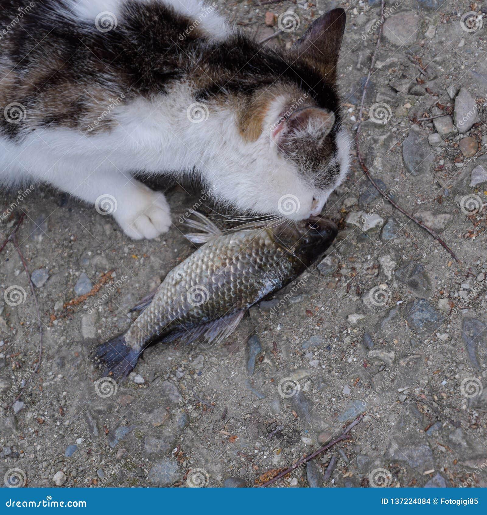 Immagini Di Riserva Di Il Gatto Mangia Il Pesce La Sovranità Di