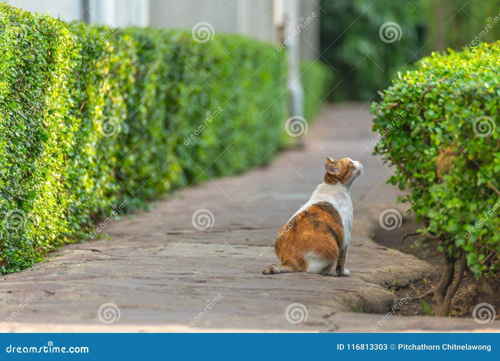 Il gatto marrone bianco si siede sullo sguardo al suolo al piccolo albero verde in giardino