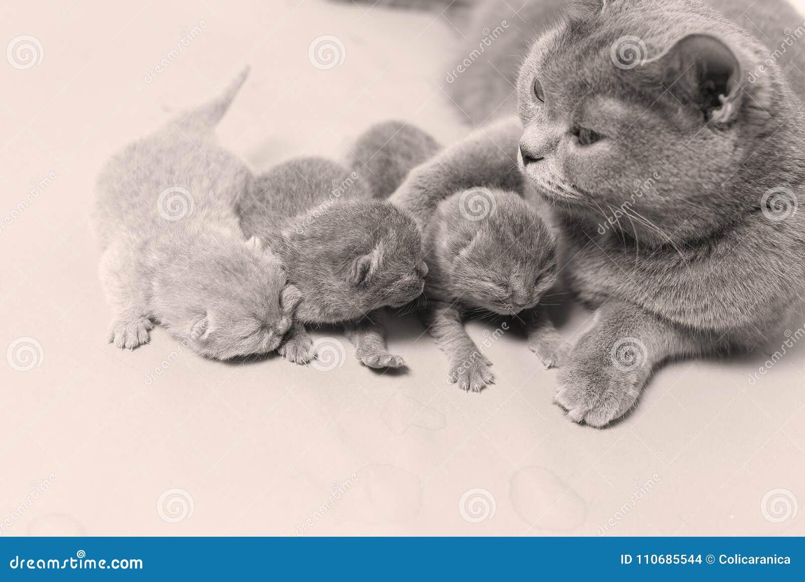 Il gatto prende la cura dei gattini