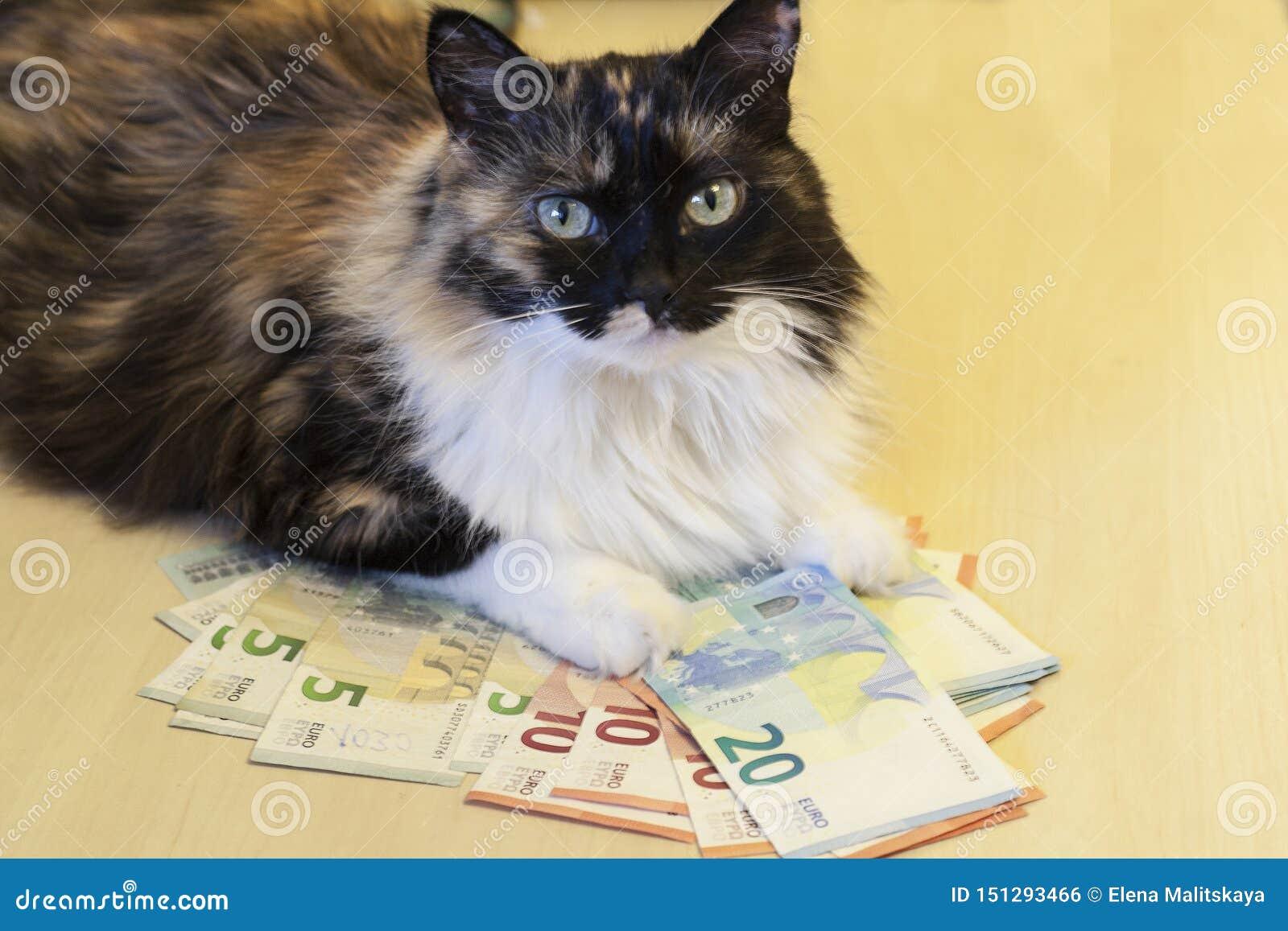 Il gatto si trova sui soldi