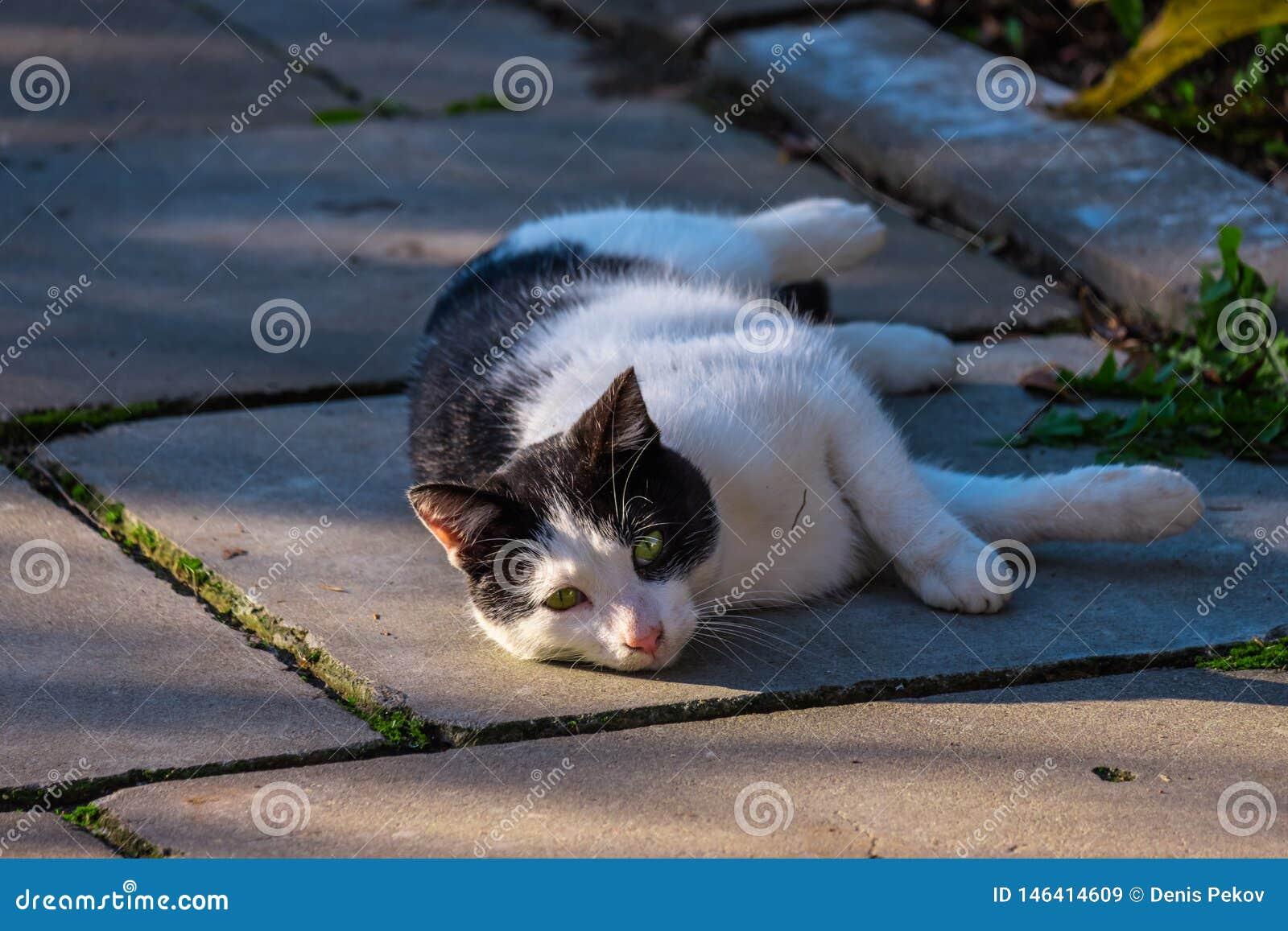 Il gatto sta riposando sulla via