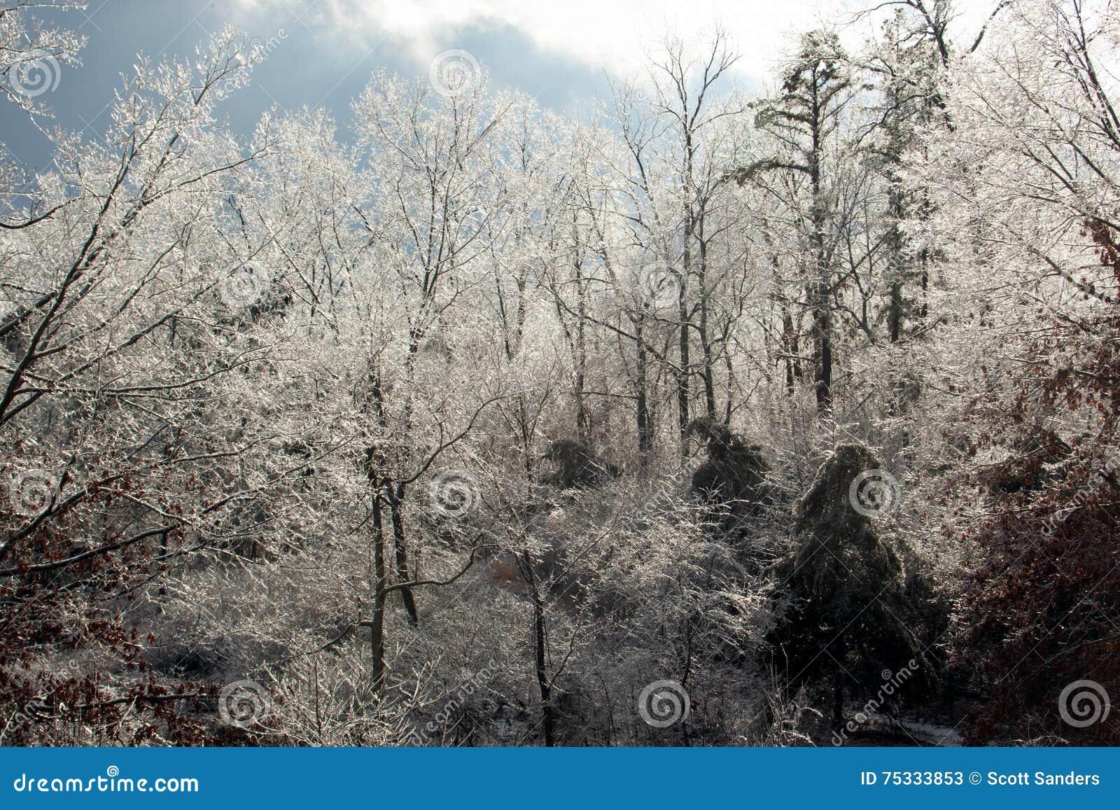 Il ghiaccio ha coperto gli alberi