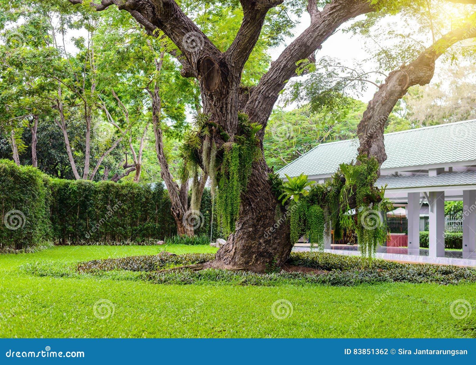 Grandi Alberi Da Giardini il giardino decorativo ha grandi alberi fotografia stock