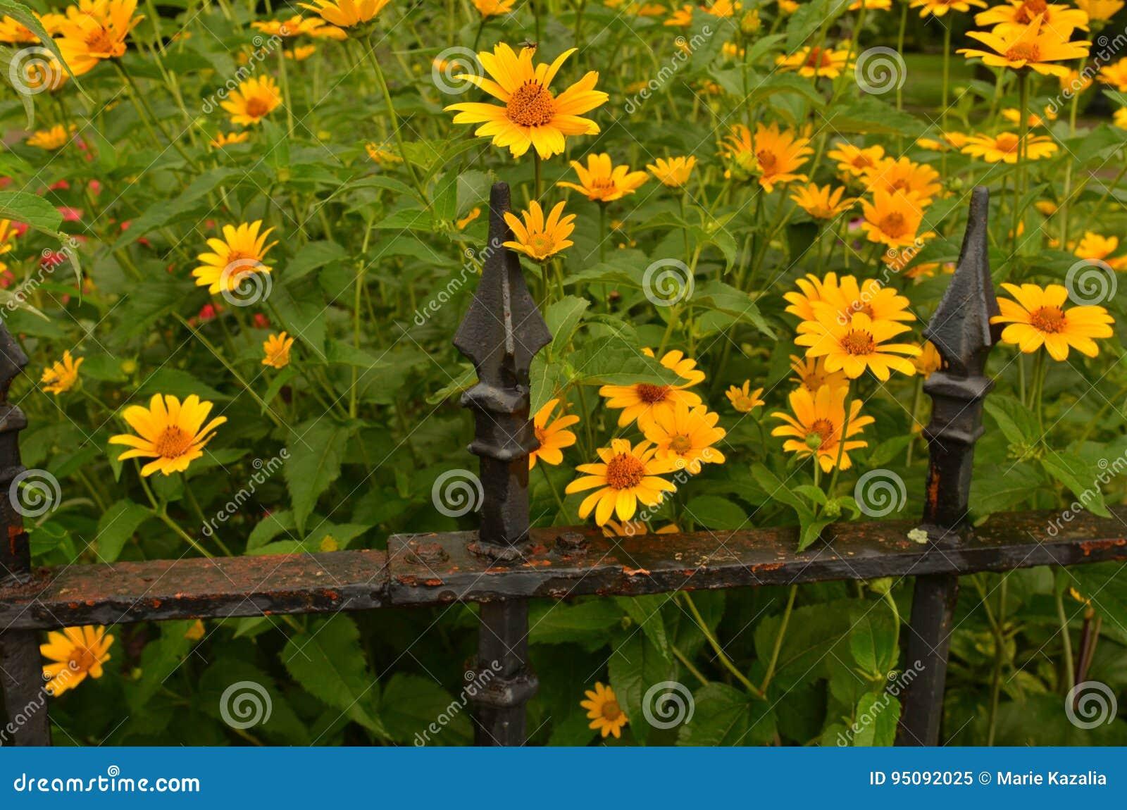 Recinti da giardino e alberi particolari da giardino - Recinti per cani da esterno leroy merlin ...