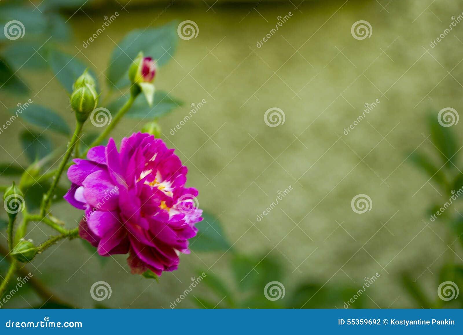 Il giardino ornamentale è aumentato